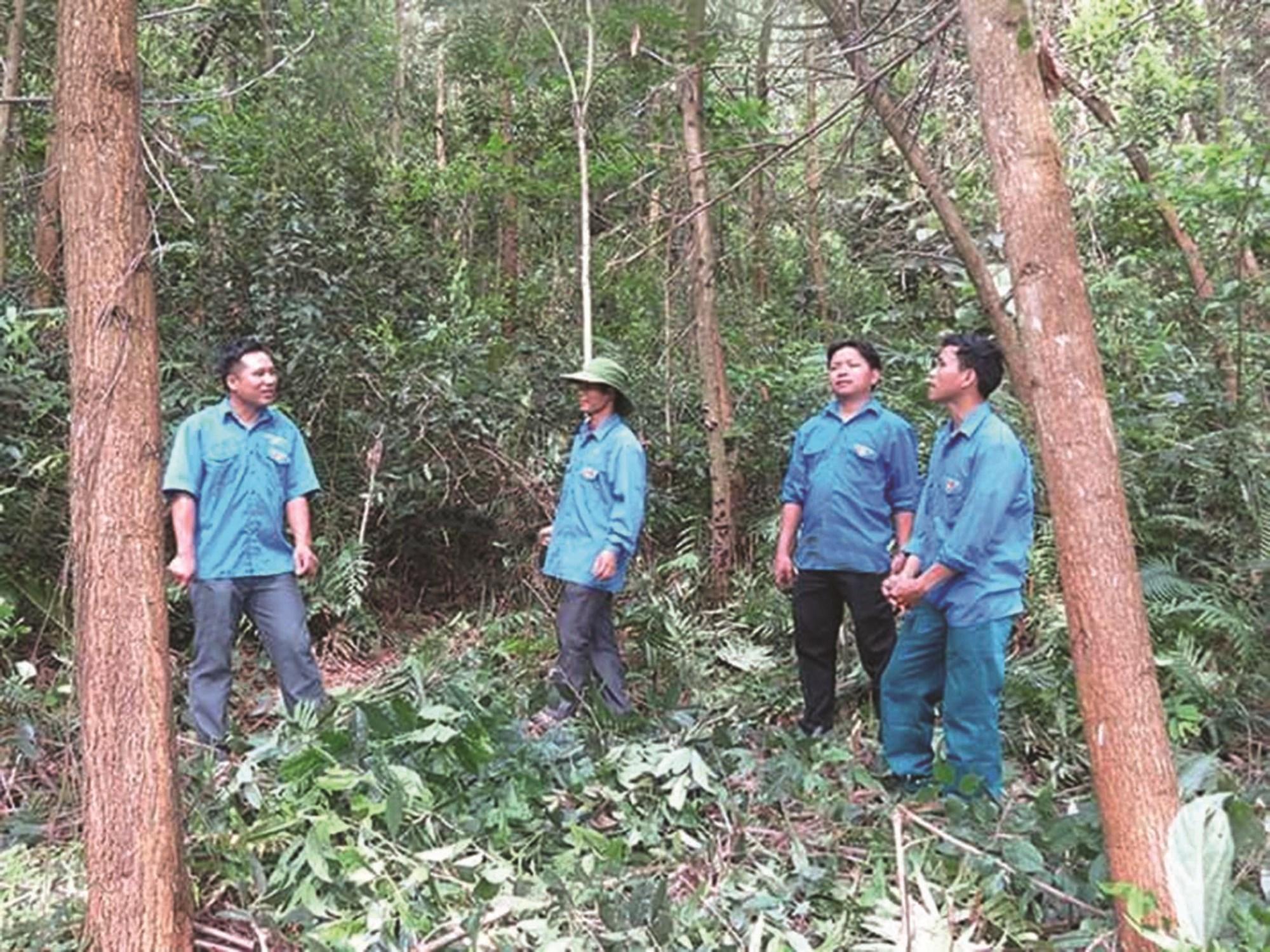 Đoàn viên thanh niên thôn Tàu Tiến, xã Đồn Đạc, huyện Ba Chẽ chia sẻ về kinh nghiệm trồng rừng