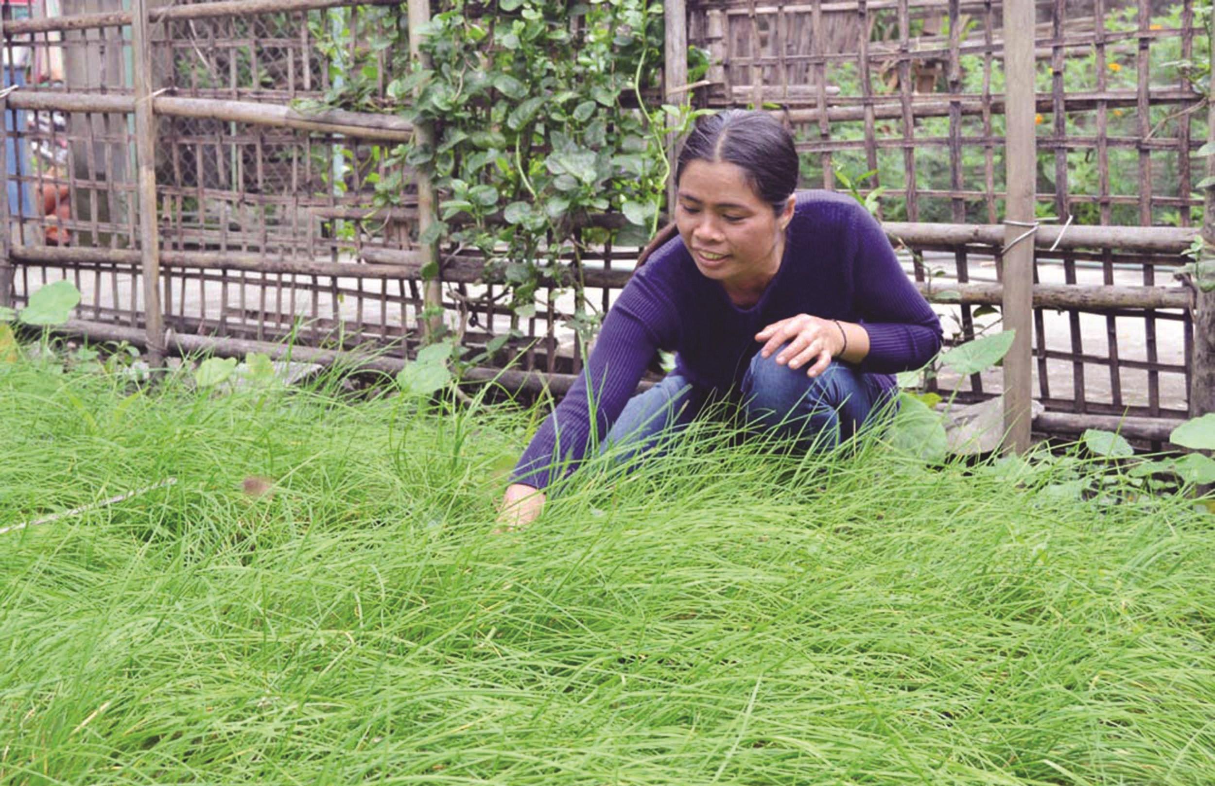 Bà Vi Thị Quỳnh ở xã Môn Sơn, huyện Con Cuông là một trong những hộ tự nguyện làm đơn xin ra khỏi hộ nghèo