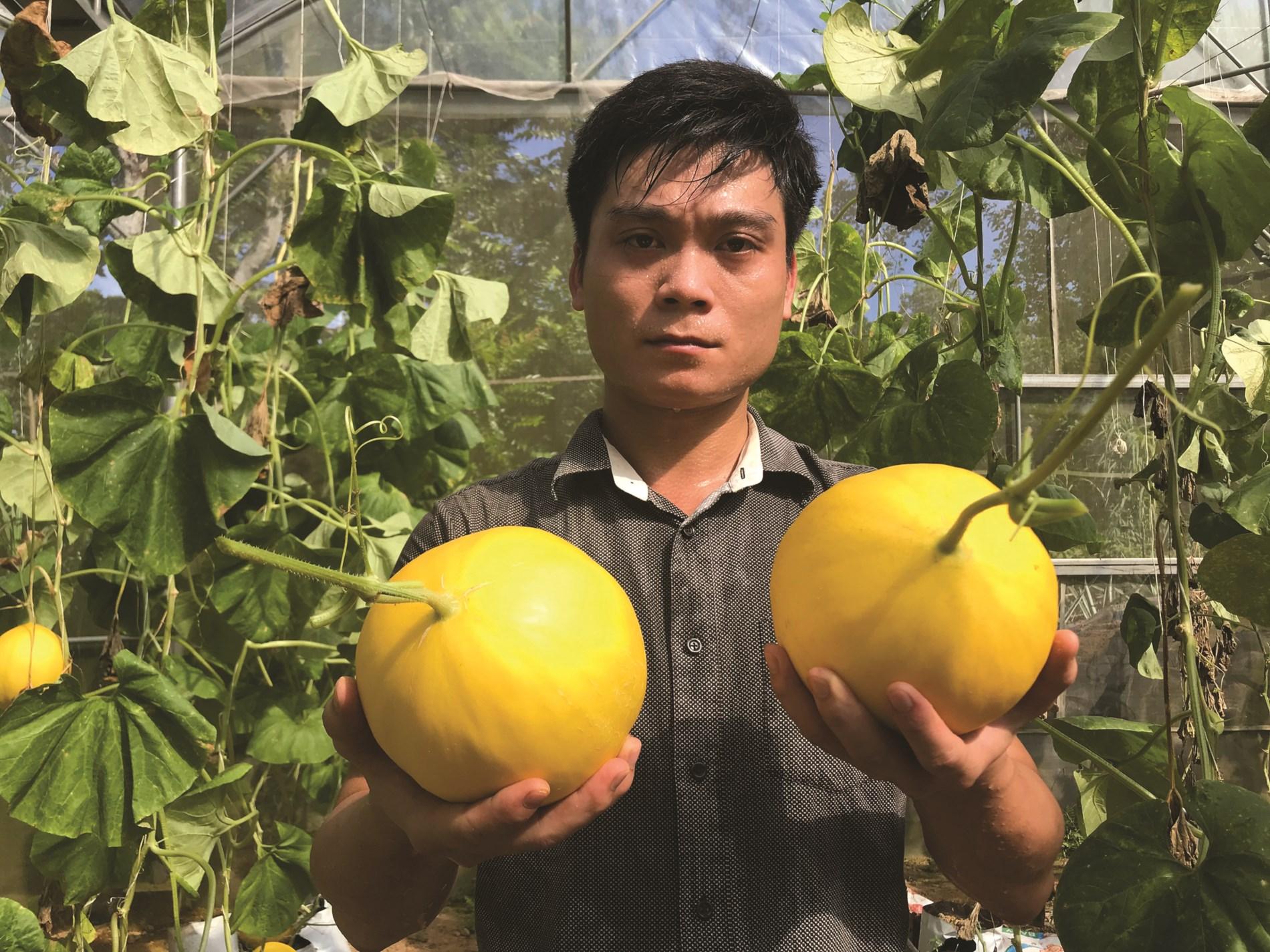Mô hình trồng dưa ở thôn Xuân Lập mang lại hiệu quả kinh tế cao.