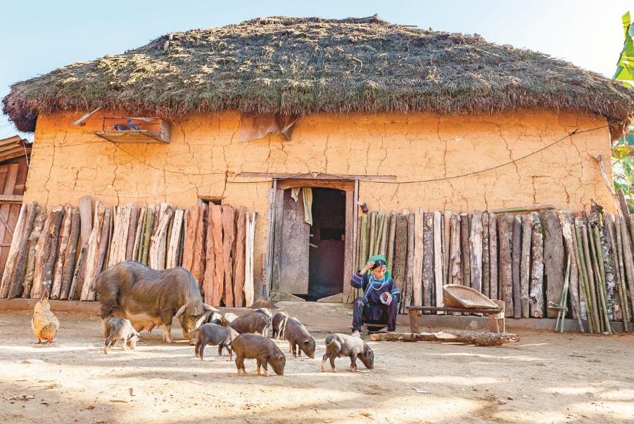 Nếu không có kế hoạch bảo tồn, gìn giữ, những ngôi nhà trình tường mái lợp cỏ của người Hà Nhì sẽ chỉ còn trong ký ức.