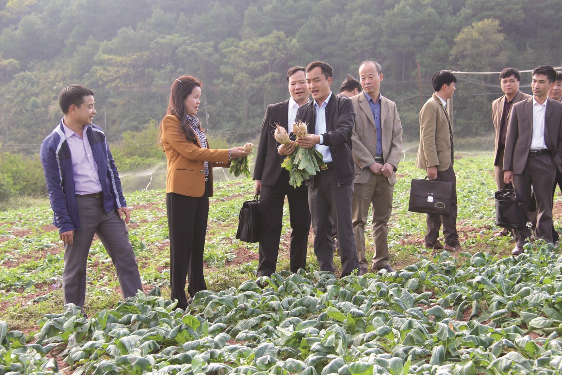 Đoàn cán bộ thăm quan mô hình rau sạch tại thôn Bắc Nga, xã Gia Cát, huyện Cao Lộc.