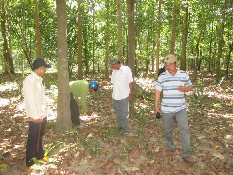 Người dân chăm sóc rừng đã được giao khoán.