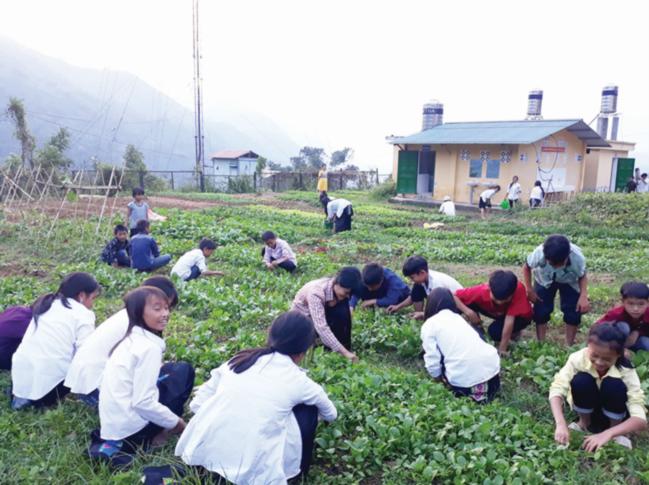 Học sinh Trường THCS Nậm Cang (Lào Cai) chăm sóc vườn rau bán trú sau giờ học.