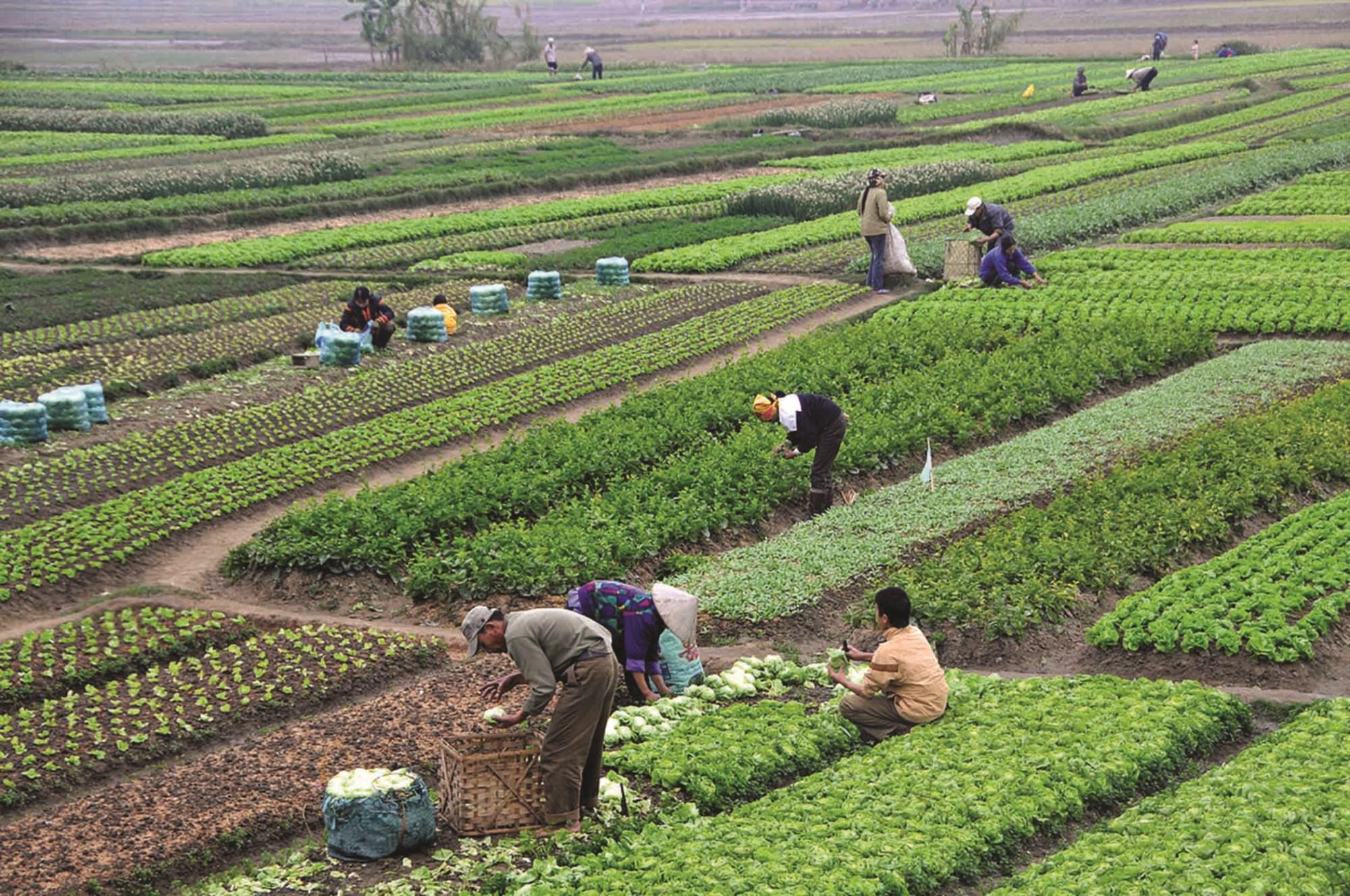 Việc ứng dụng tiến bộ KH&CN góp phần nâng cao năng suất, chất lượng sản phẩm nông nghiệp.