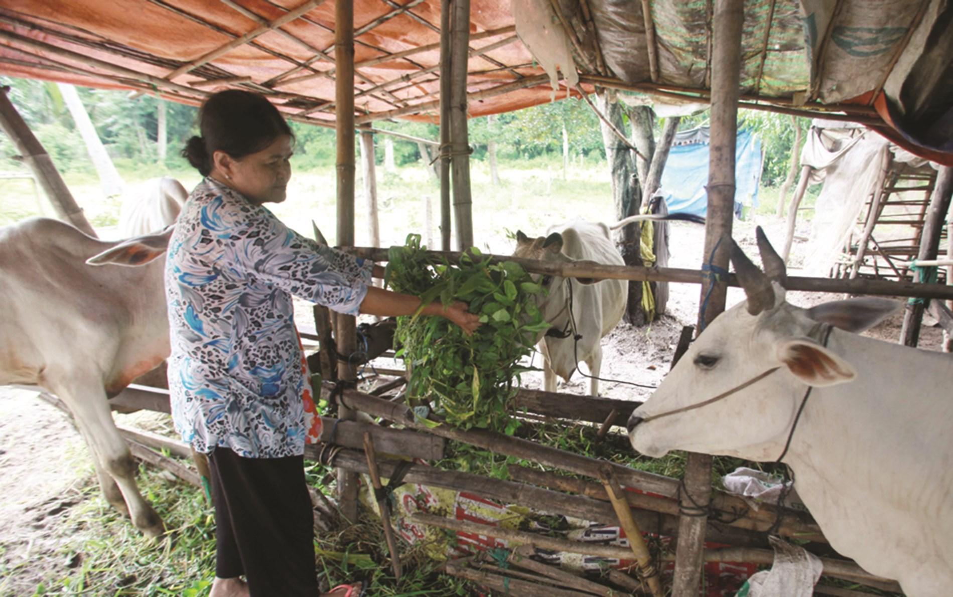 Nhờ vốn vay ưu đãi từ NHCSXH, nhiều hộ nghèo ở tỉnh An Giang có cơ hội vươn lên thoát nghèo, ổn định cuộc sống.