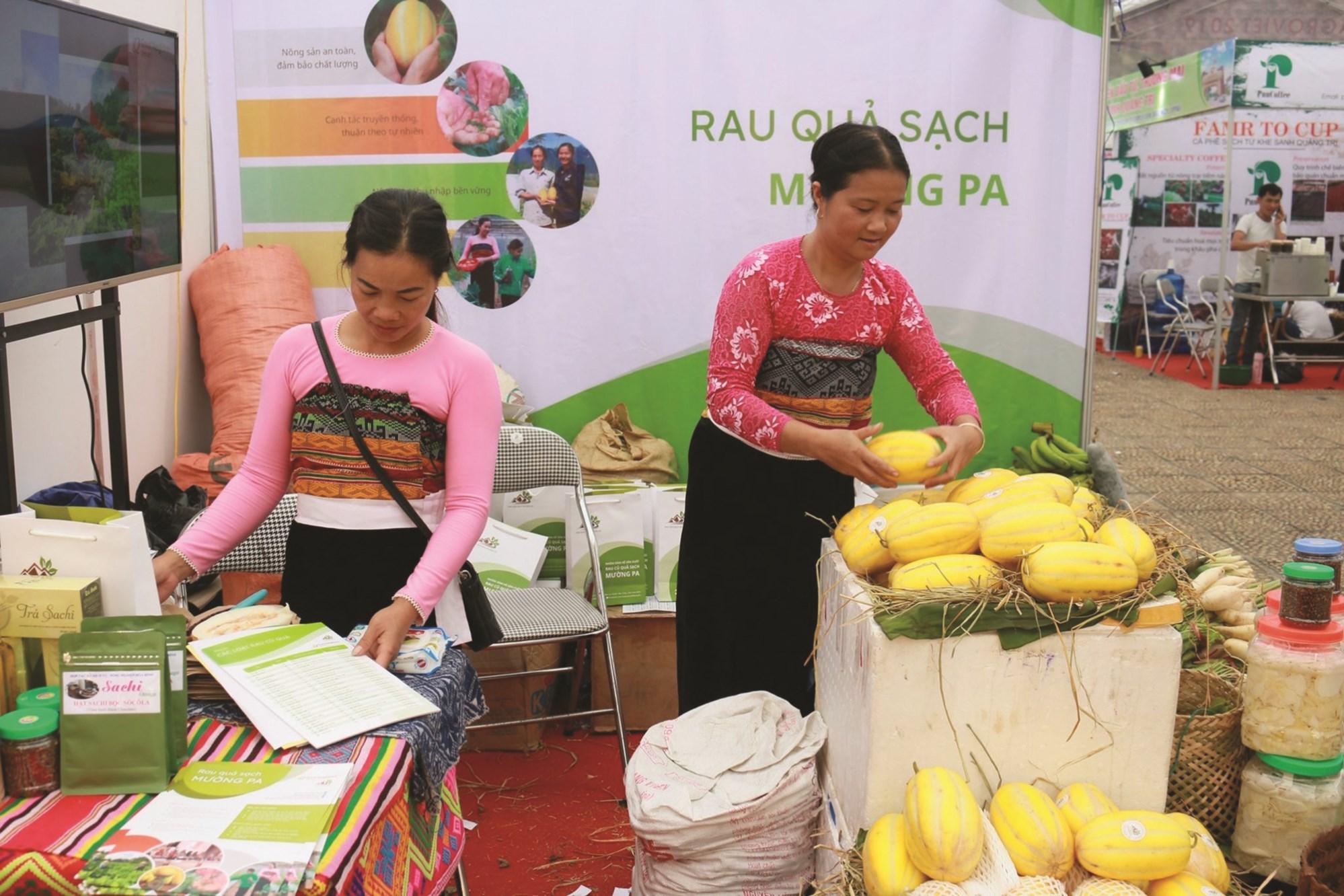 Dưa lê siêu ngọt Hàn Quốc của người dân xã Xăm Khòe, huyện Mai Châu (Hòa Bình)