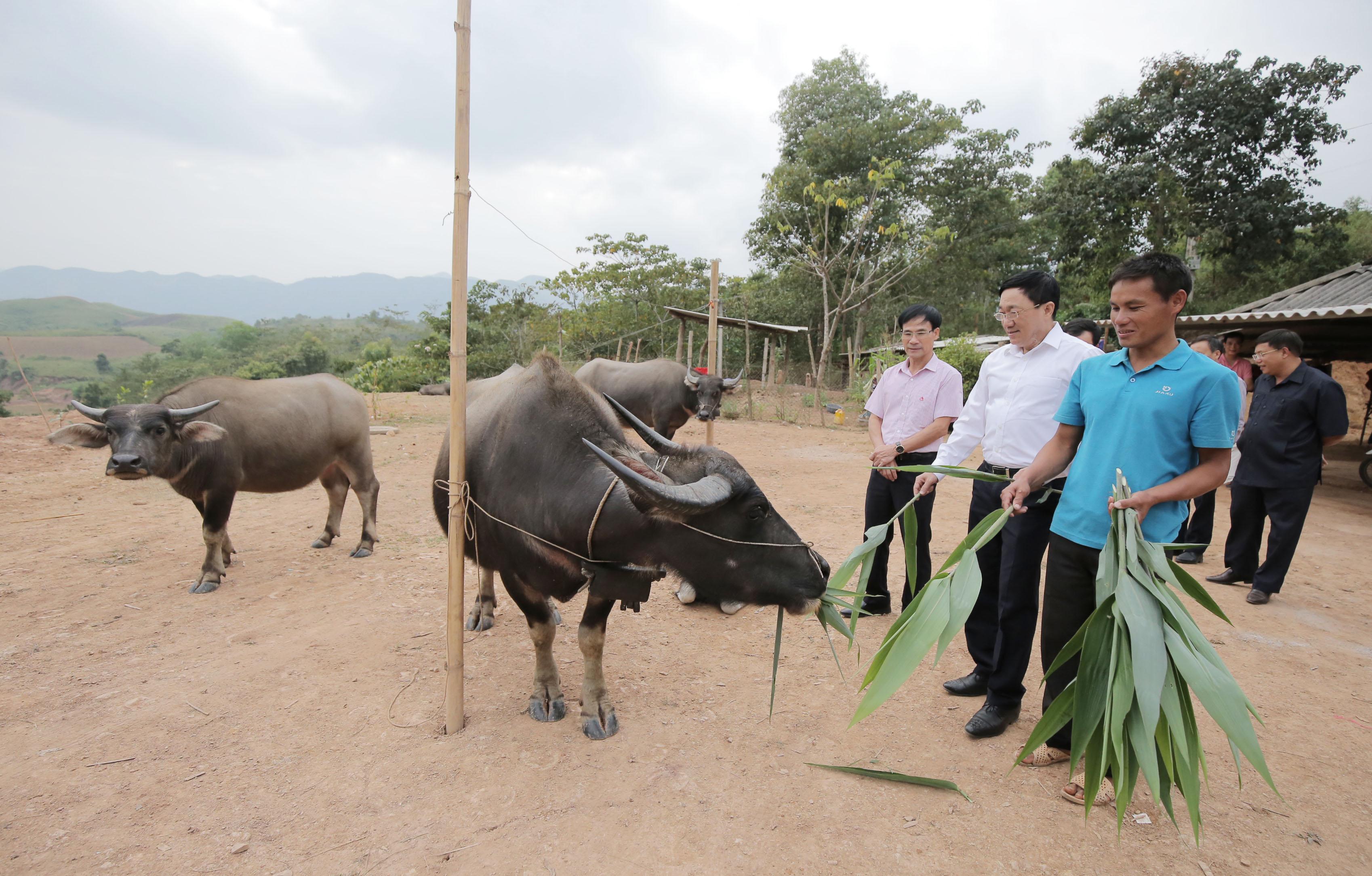 Nhờ vay vốn chính sách mà nhiều hộ đồng bào ở thôn Nậm Chim 1, xã Si Pa Phìn, huyện Nậm Pồ đã thay đổi hẳn cuộc sống
