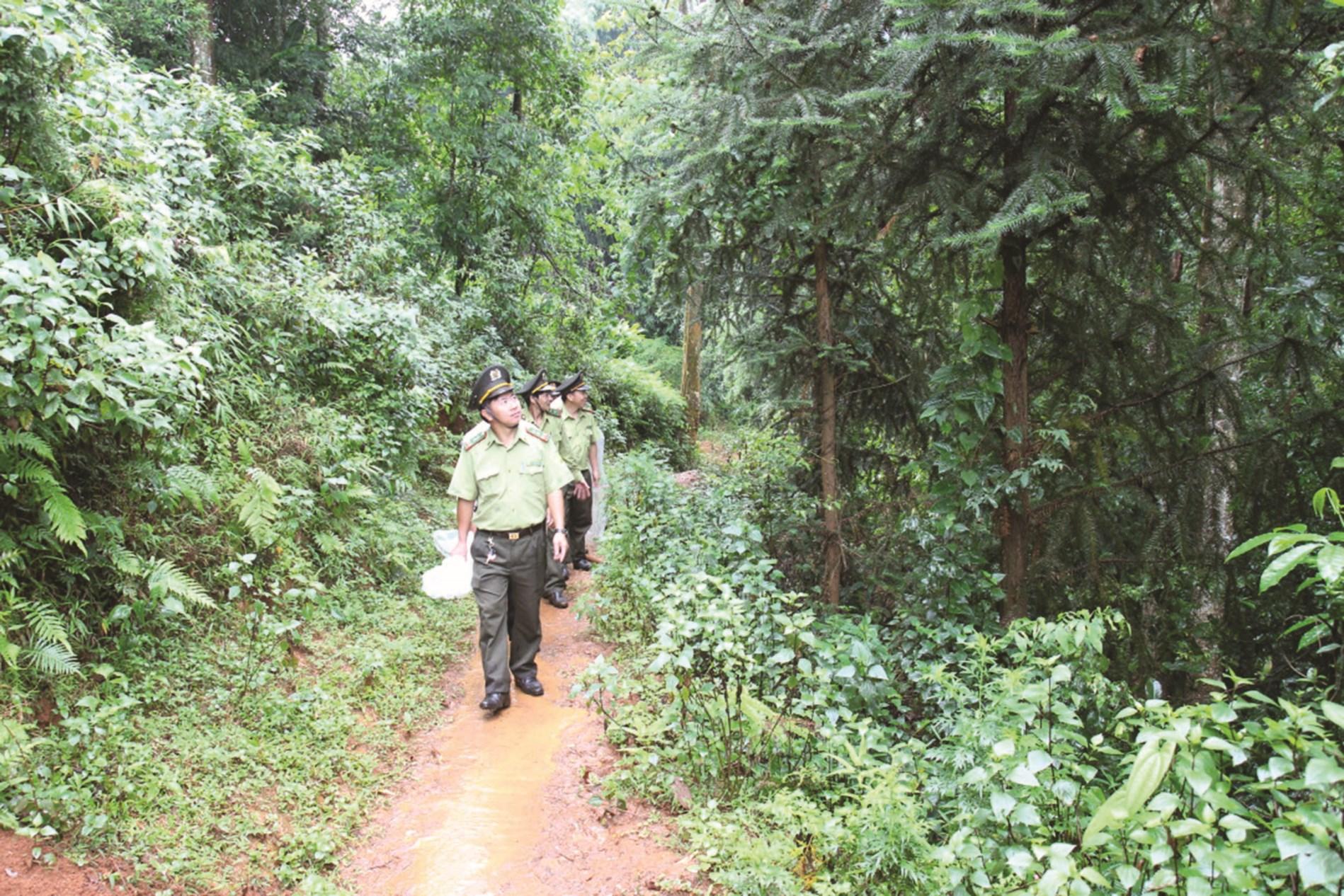 Cán bộ Kiểm lâm tuần tra rừng.