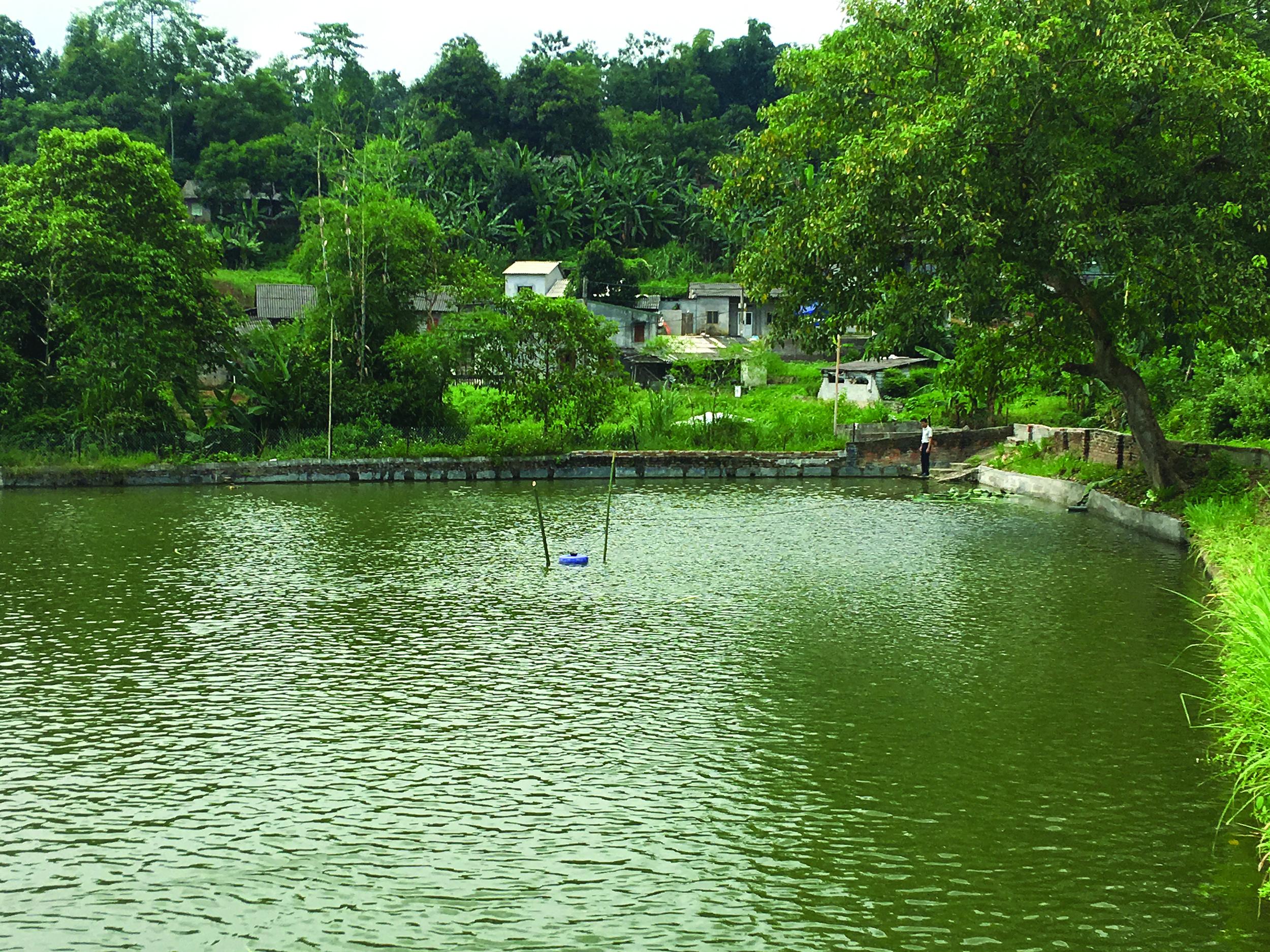 Mô hình nuôi cá của gia đình ông Phủ được nhiều hộ dân trong thôn học tập và làm theo