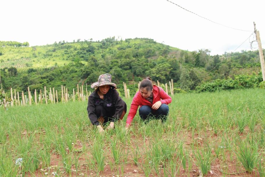 Bà Nguyễn Thị Chinh ở buôn Mùi 3, xã Cư Né có kinh tế khá giả nhờ trồng nén.