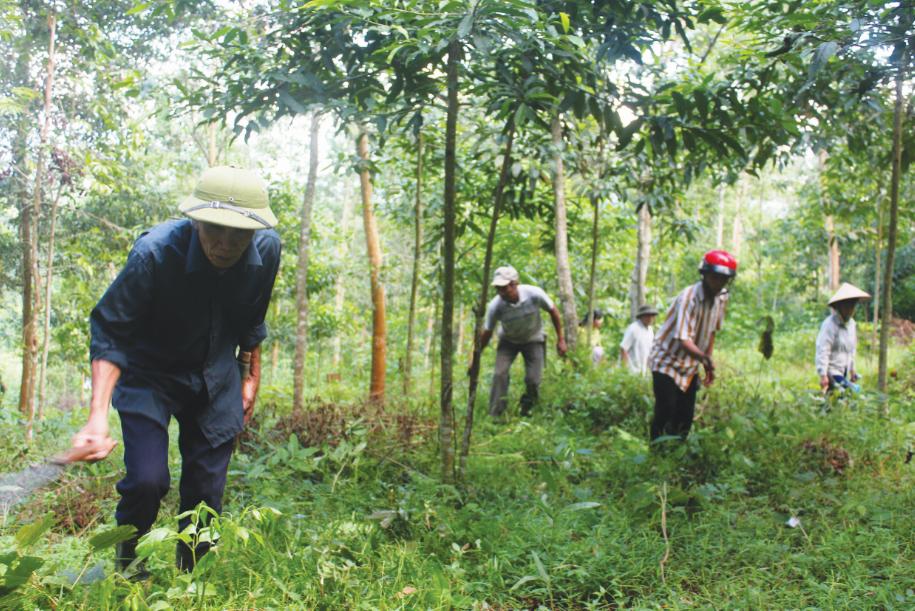 Ngoài nợ tiền trồng rừng thì suất đầu tư 15 triệu đồng/ha trong 4 năm, khiến người dân không mặn mà tham gia trồng rừng.