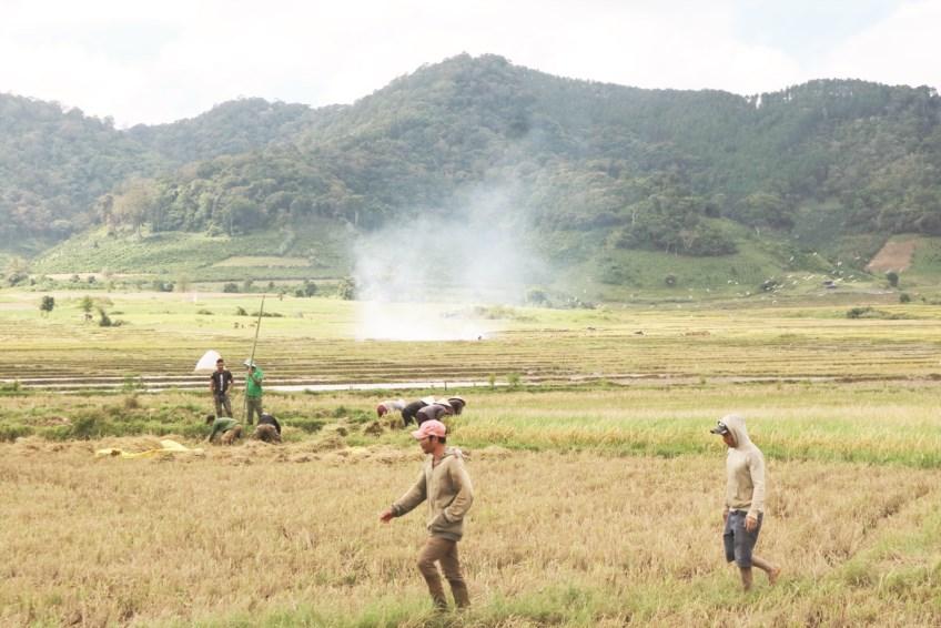 Trên cánh đồng lúa Chu-ru vừa qua vụ gặt.