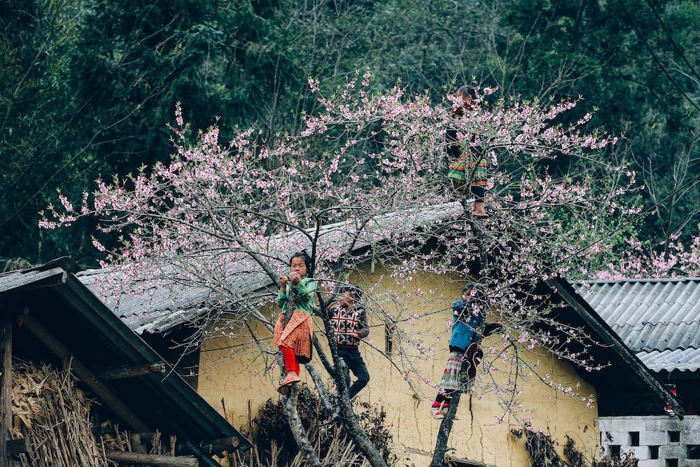 """Hình ảnh những đứa trẻ con người dân tộc nô đùa trên những cây đào cổ khiến không ít các nhiếp ảnh gia mất nhiều giờ cũng như nhiều """"shot hình"""" để ghi lại khoảng khắc đáng yêu này."""