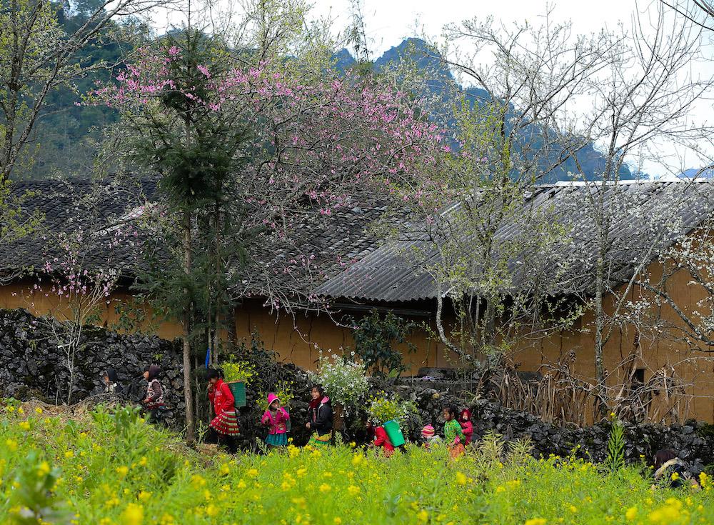 Hà Giang vốn dĩ mùa nào cũng đẹp, nhưng những ngày xuân, vẻ đẹp của mảnh đất địa đầu Tổ quốc này được tô điểm bằng màu sắc mộng mơ của hoa đào.