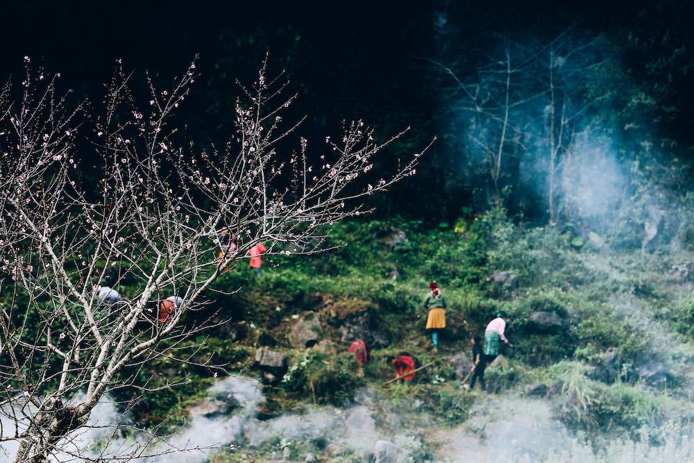 Những thân đào khẳng khiu nở đầy hoa rực rỡ tô điểm cho bức tranh lao động, sản xuất của đồng bào vùng cao