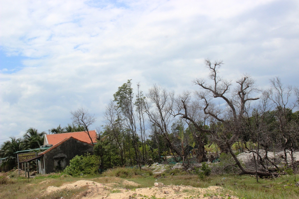 Nhiều căn nhà xây trái phép trên khu rừng bần