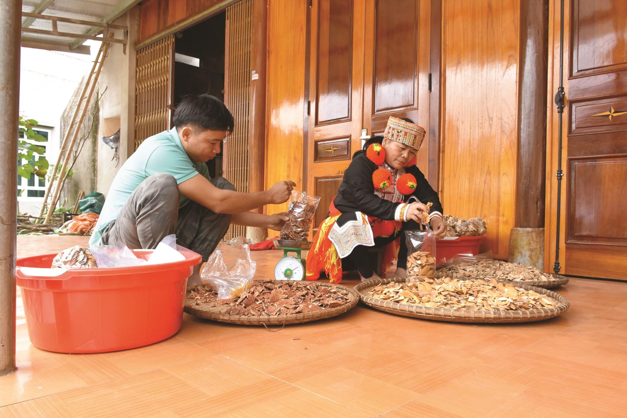 Mế Triệu Thị Tâm, Thôn Tân Hoa, xã Bình An (Lâm Bình) cùng con trai đóng gói các thang thuốc gia truyền của gia đình.