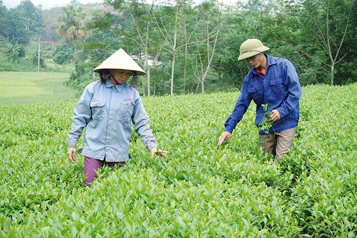 Xây dựng nông thôn mới đã giúp người dân thay đổi tư duy, chủ động vươn lên phát triển kinh tế.