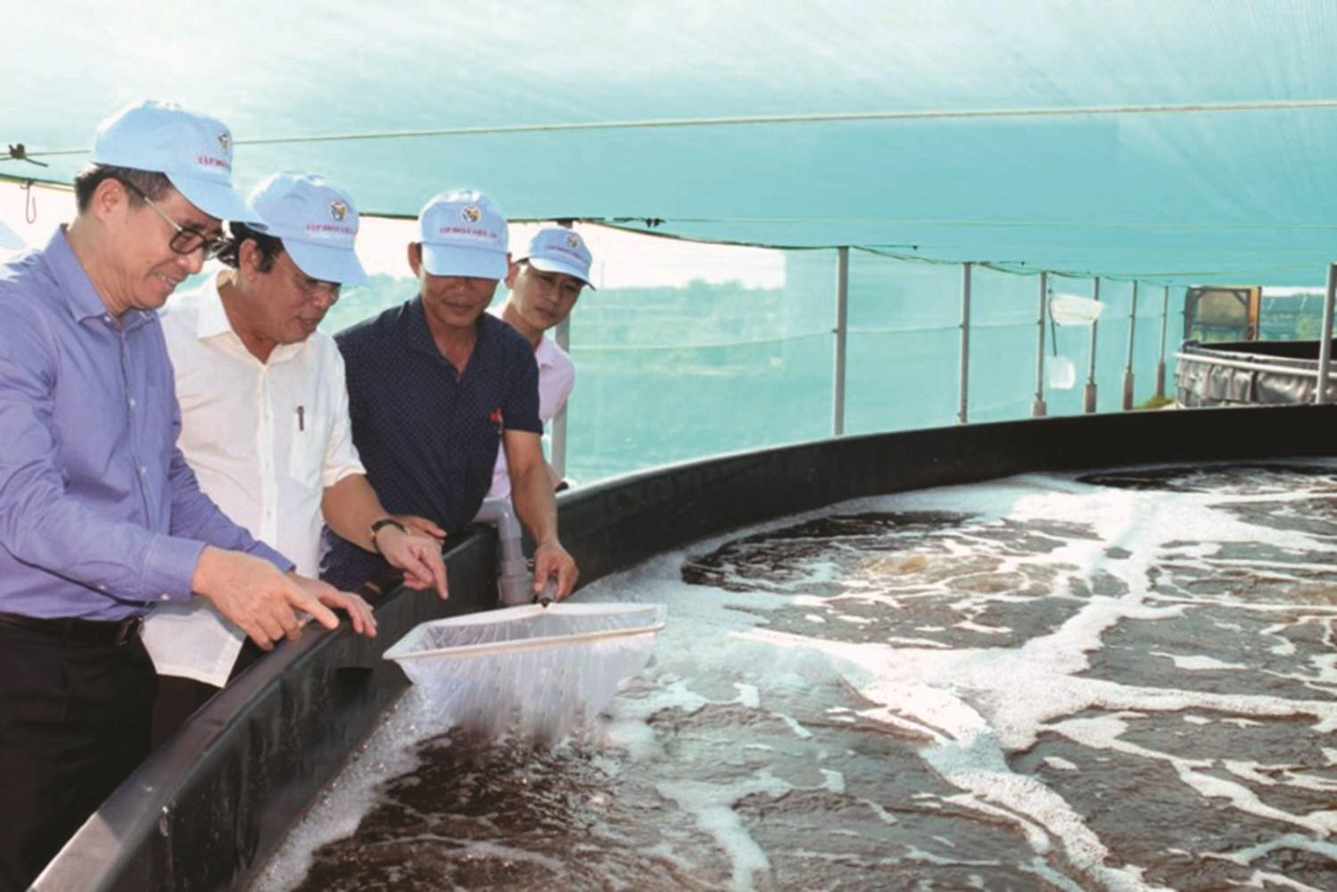 Ông Nguyễn Quang Dương, Bí thư Tỉnh ủy Bạc Liêu (áo xanh) và ông Dương Thành Trung, Chủ tịch UBND tỉnh Bạc Liêu thăm mô hình nuôi tôm của HTX Công nghệ cao phát triển tôm Bạc Liêu