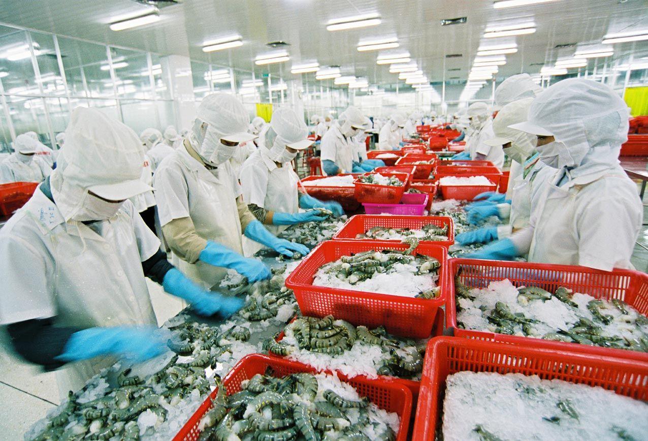 Tôm là một trong những thế mạnh trong xuất khẩu nông sản ở Việt Nam
