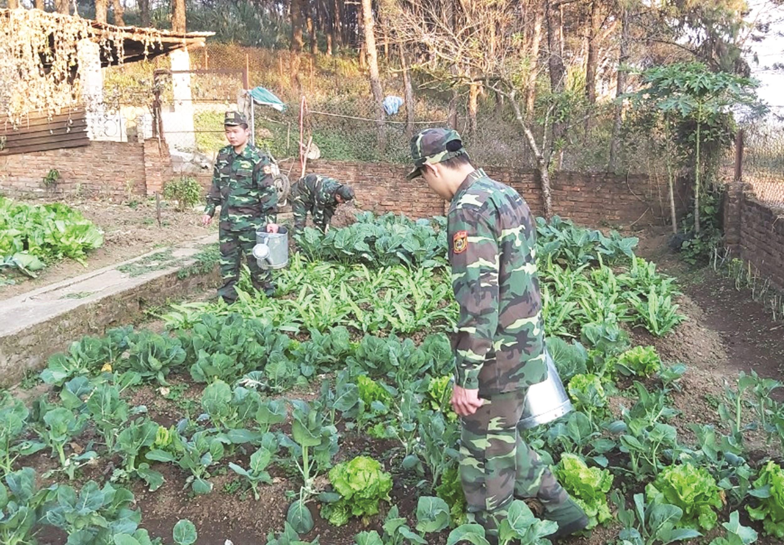 Các chiến sĩ Biên phòng trên Điểm cao 820 tăng gia sản xuất