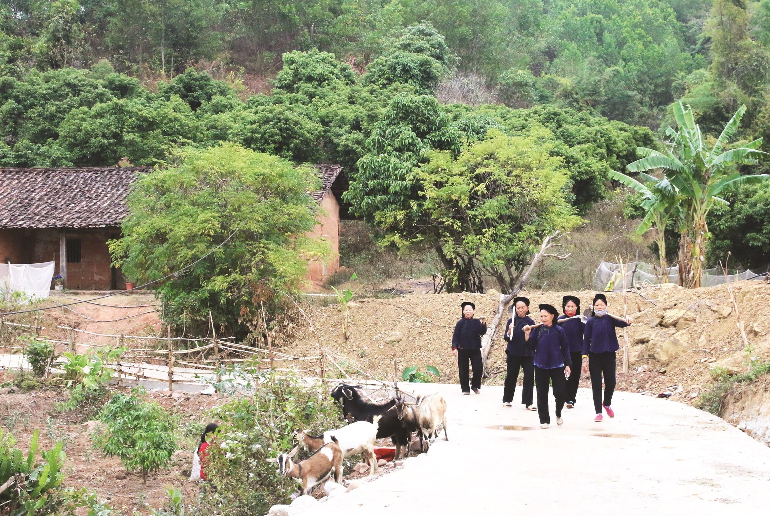 Tuyến đường liên thôn Bắc Hoa, xã Tân Sơn, huyện Lục Ngạn (Bắc Giang) được đổ bê tông, tạo điều kiện thuận lợi cho bà con ra đồng