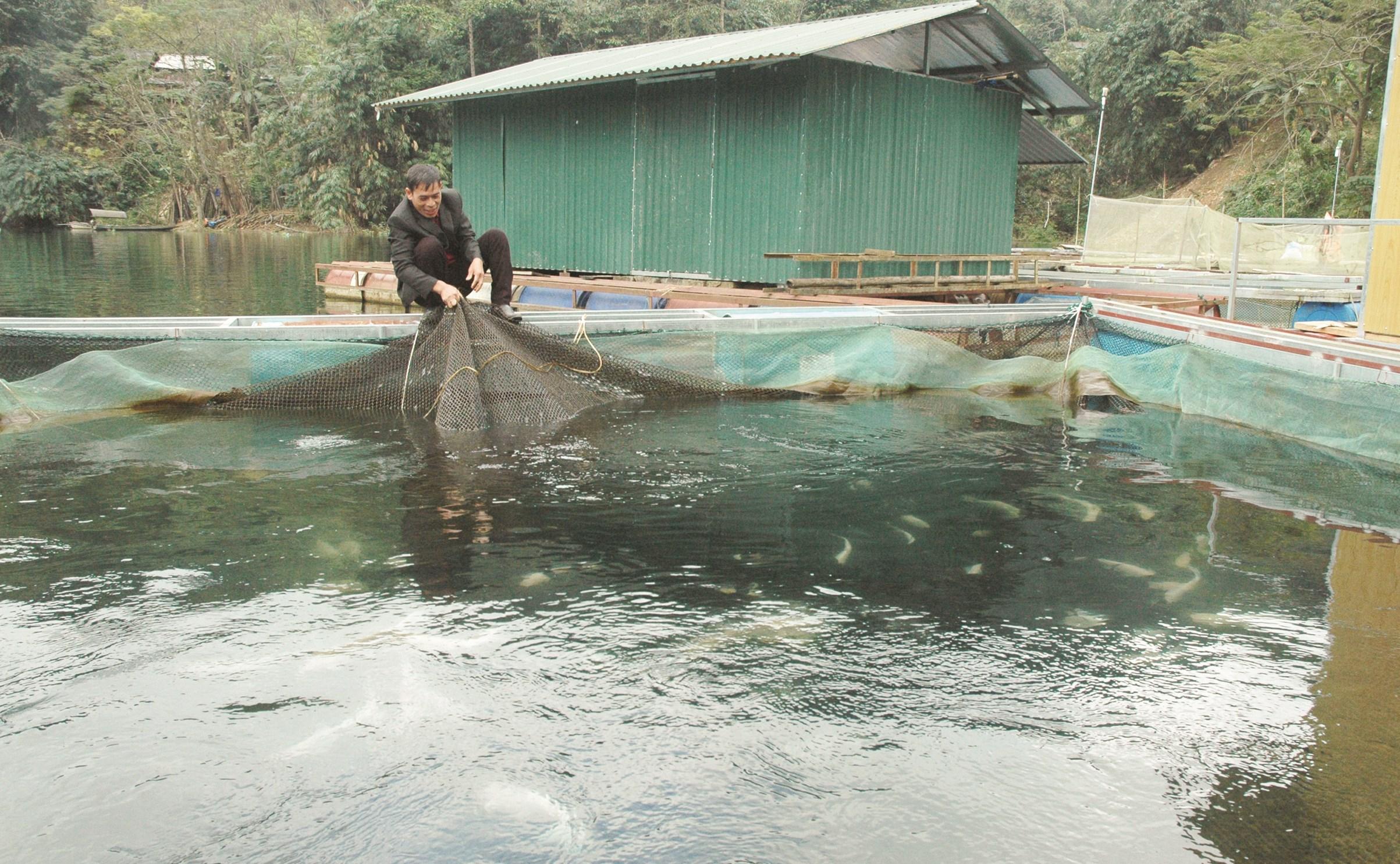 Người dân nuôi cá lồng bè trên lòng hồ Thủy điện Na Hang