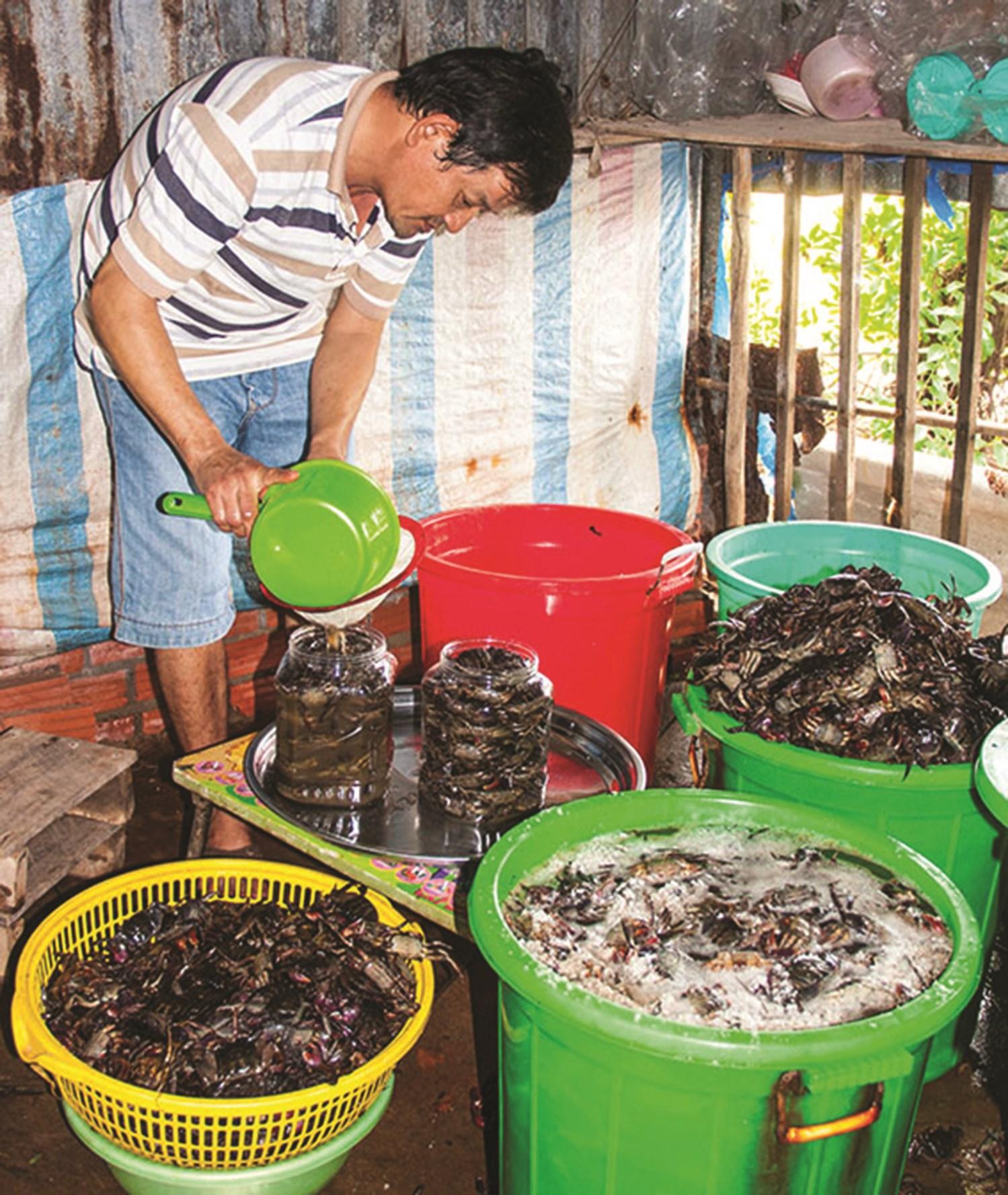 Một chủ cơ sở ba khía ở xã Hàng Vịnh, huyện Năm Căn (Cà Mau) đang thực hiện các công đoạn muối ba khía. Anh TL