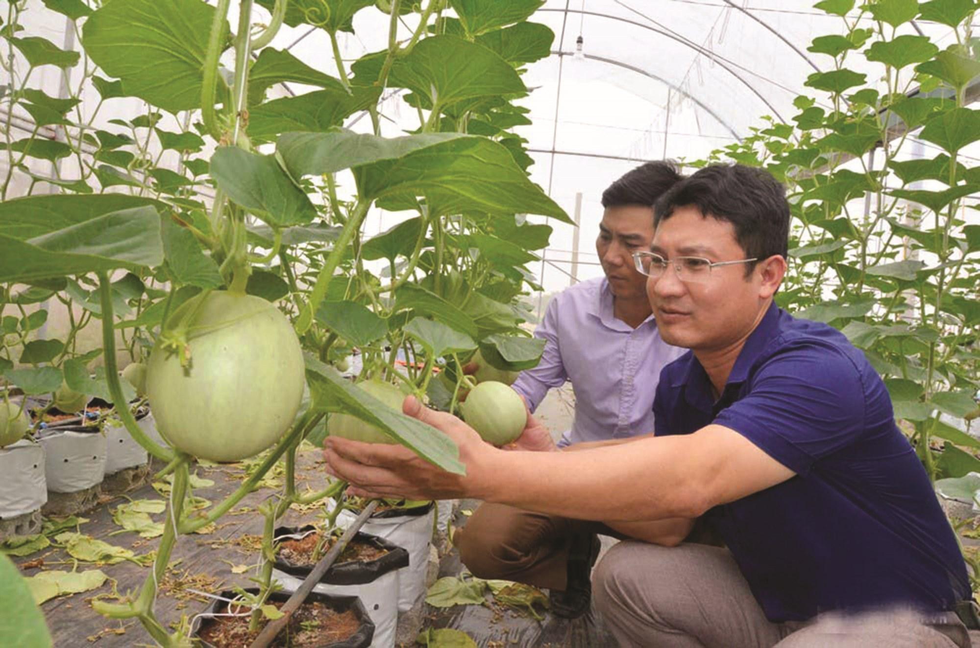 Người dân Con Cuông nỗ lực làm kinh tế để đạt tiêu chí về thu nhập. (Trong ảnh: mô hình trồng dưa lưới của người dân xã Lục Dạ).