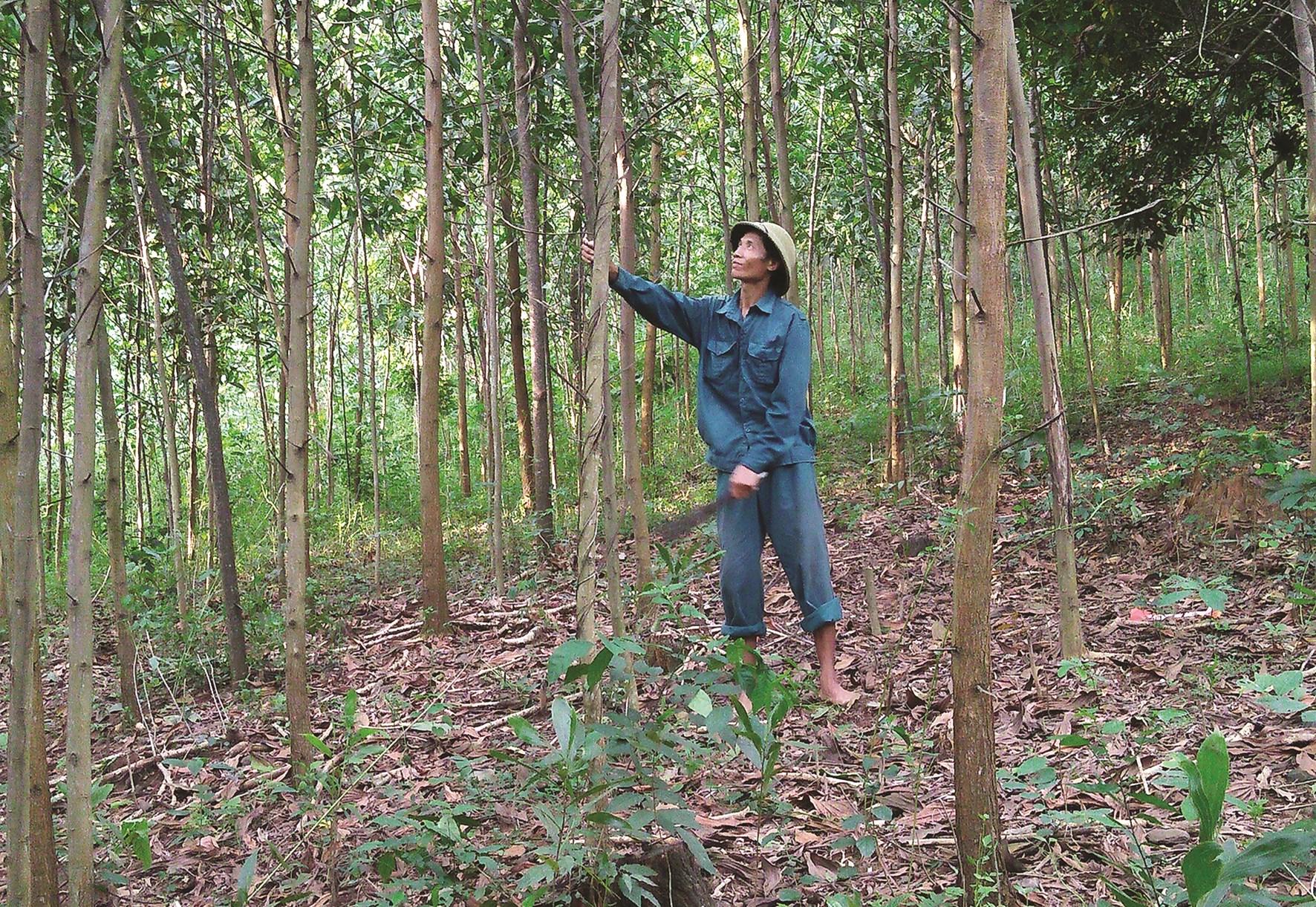 Nhiều hộ dân ở miền núi Thanh Hóa sau khi được hỗ trợ trồng rừng đã thoát khỏi danh sách hộ nghèo