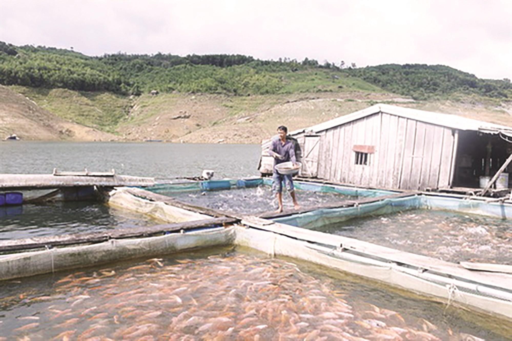 Mô hình nuôi cá lồng của anh Vừ A So có lợi nhuận lên đến 100 triệu đồng mỗi năm.