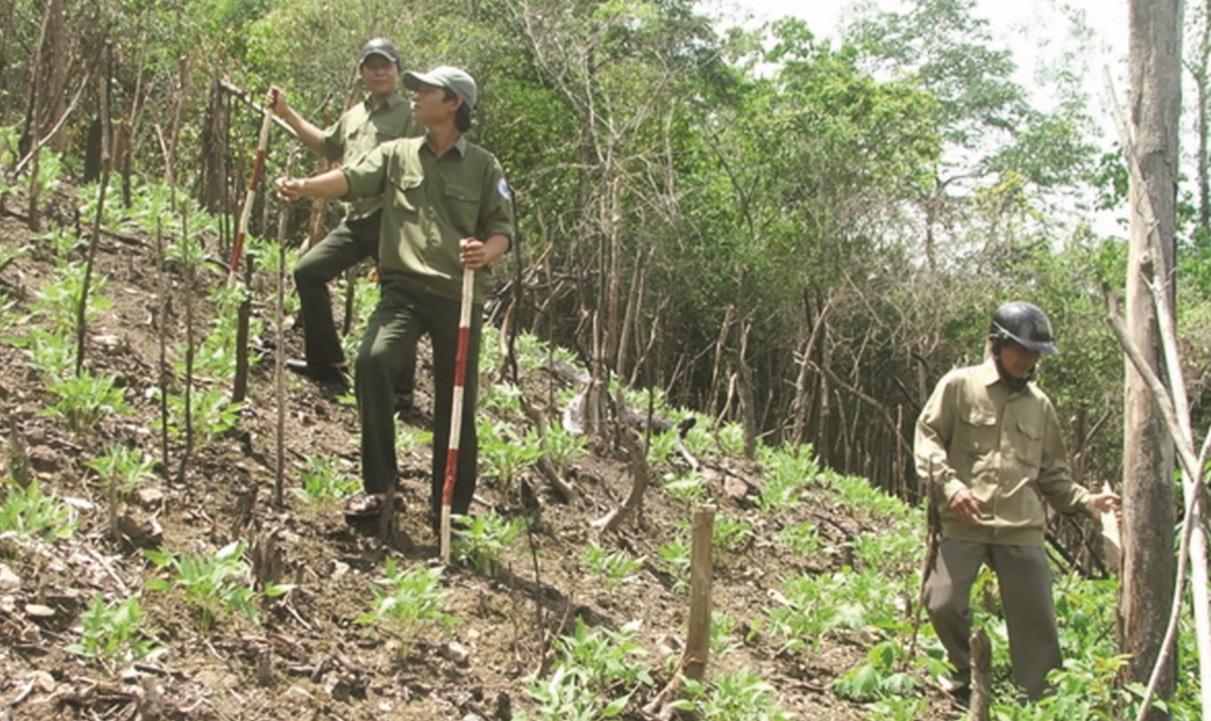 Các ngành chức năng kiểm tra chất lượng rừng trồng của người dân