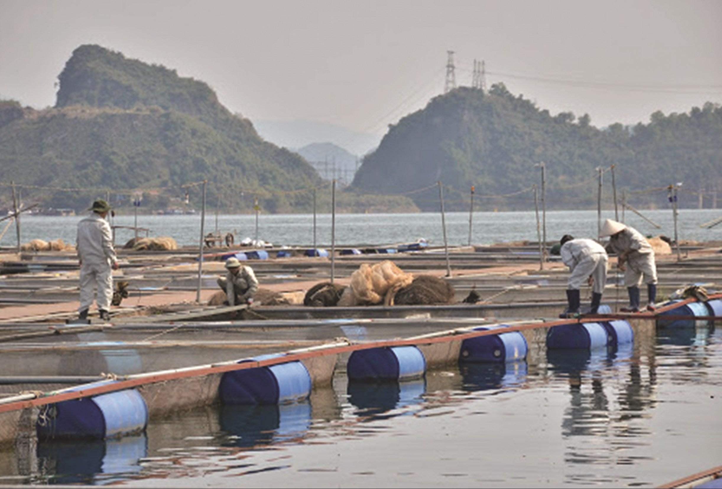 Nuôi cá lồng trên hồ thủy điện Hòa Bình cho giá trị kinh tế cao. (Ảnh tư liệu)