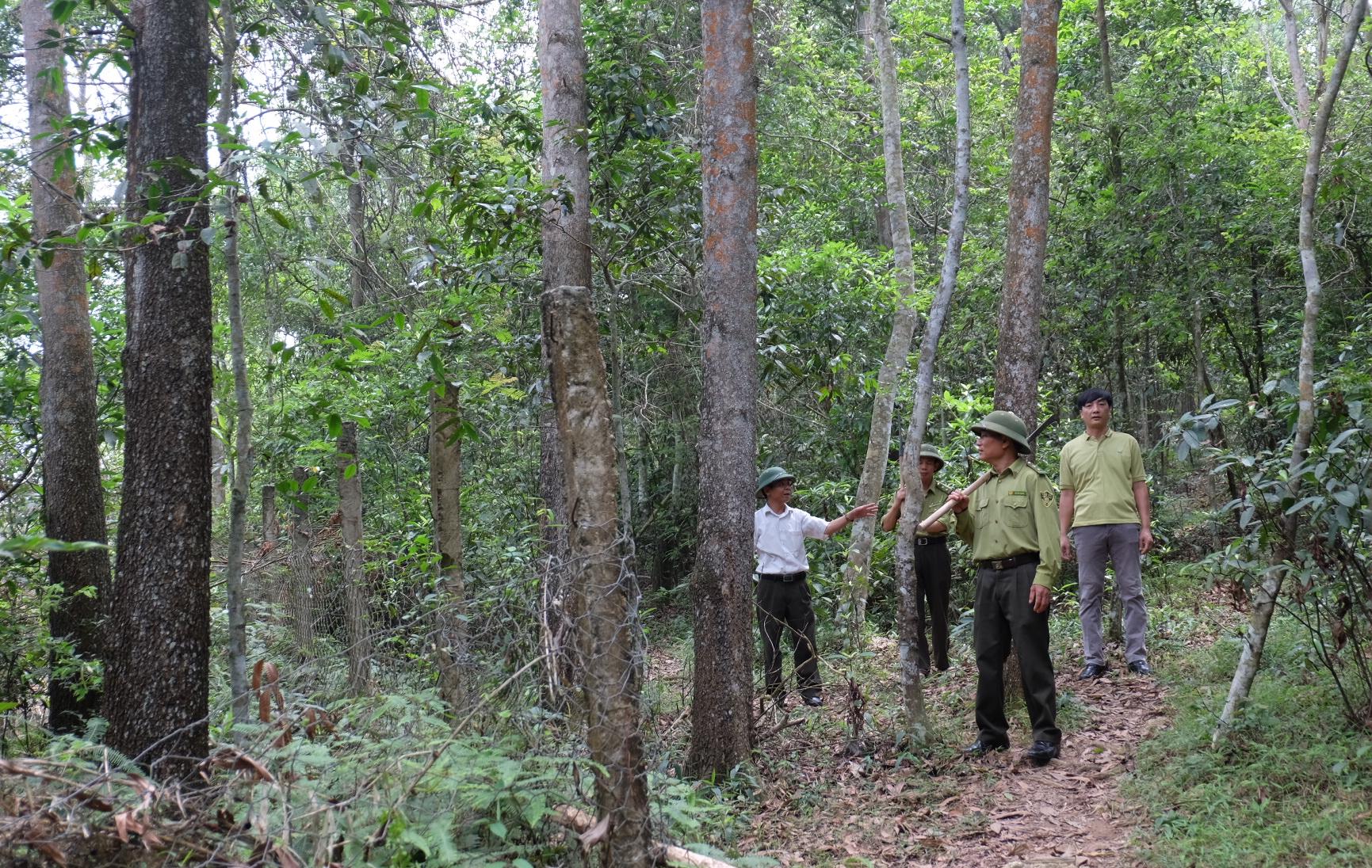 Người dân được hưởng lợi từ DVMTR đã tích cực chăm sóc, bảo vệ rừng và cải thiện sinh kế, ổn định đời sống