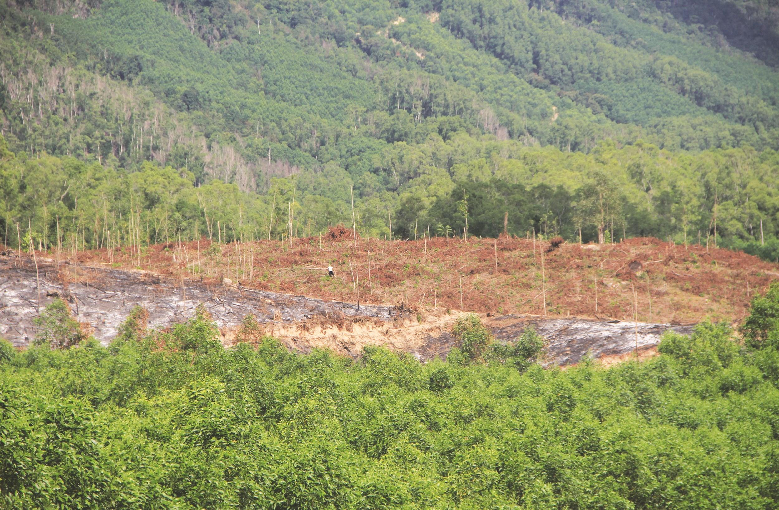 Nhiều người dân thiếu đất nên lấn chiếm đất lâm nghiệp để sản xuất