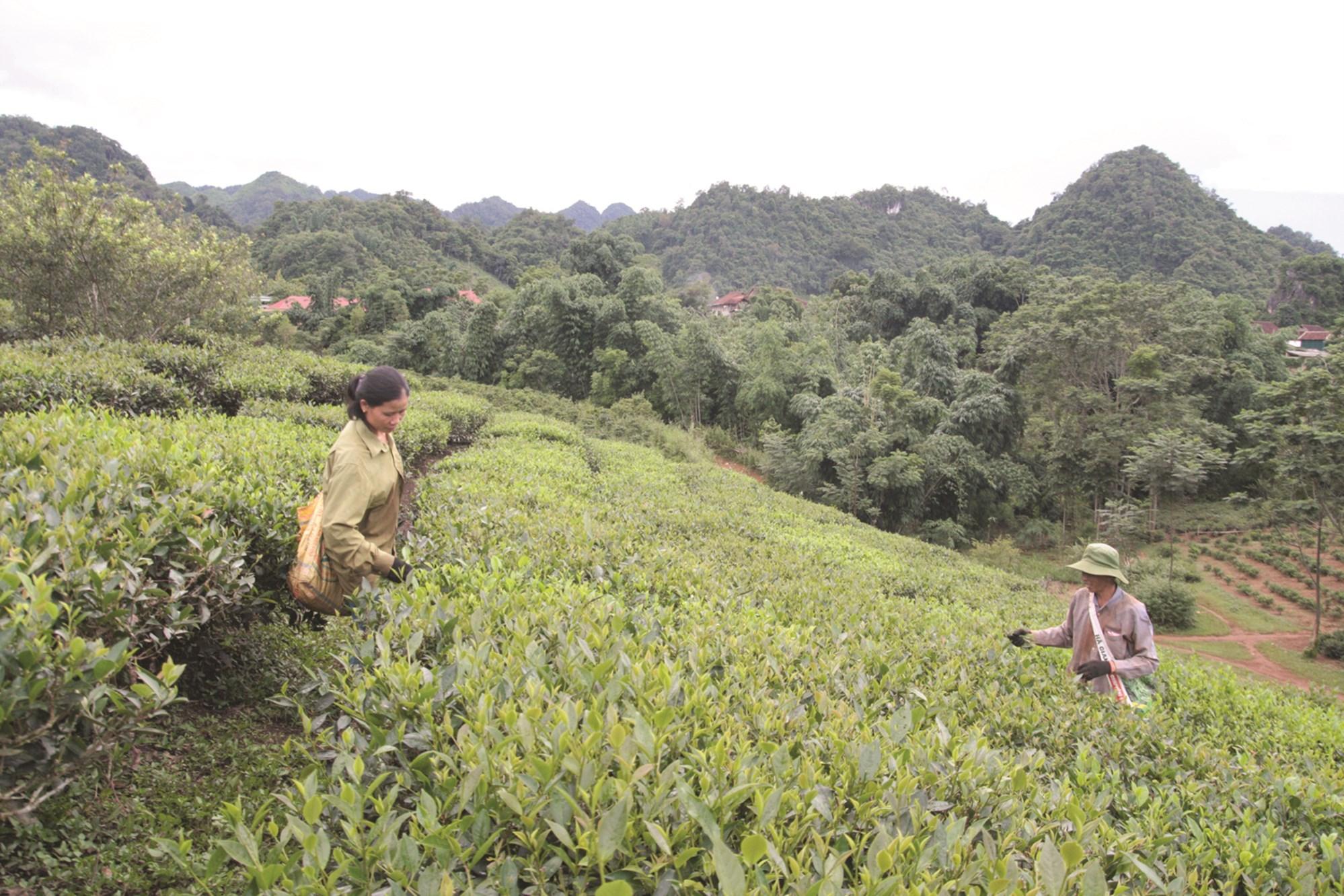 Người dân ở các xã miền núi kinh tế chủ yếu phụ thuộc vào nông - lâm nghiệp nên việc thực hiện tiêu chí thu nhập còn khó khăn.