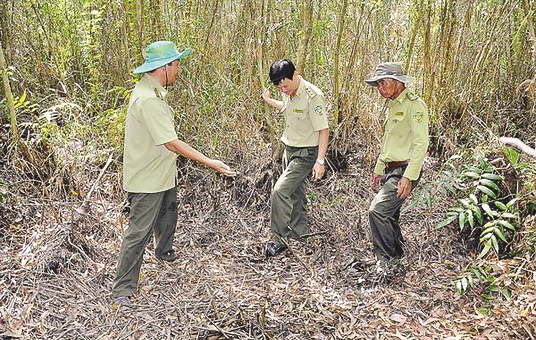 Kiểm lâm Kiên Giang tuần tra phòng chống cháy rừng. (Ảnh tư liệu)