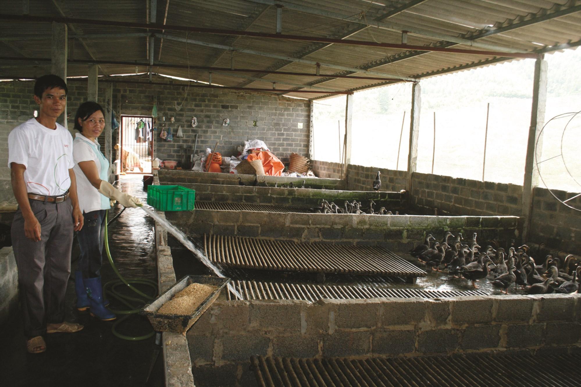 Người dân cần chú trọng vệ sinh chuồng trại để phòng tránh cúm gia cầm.