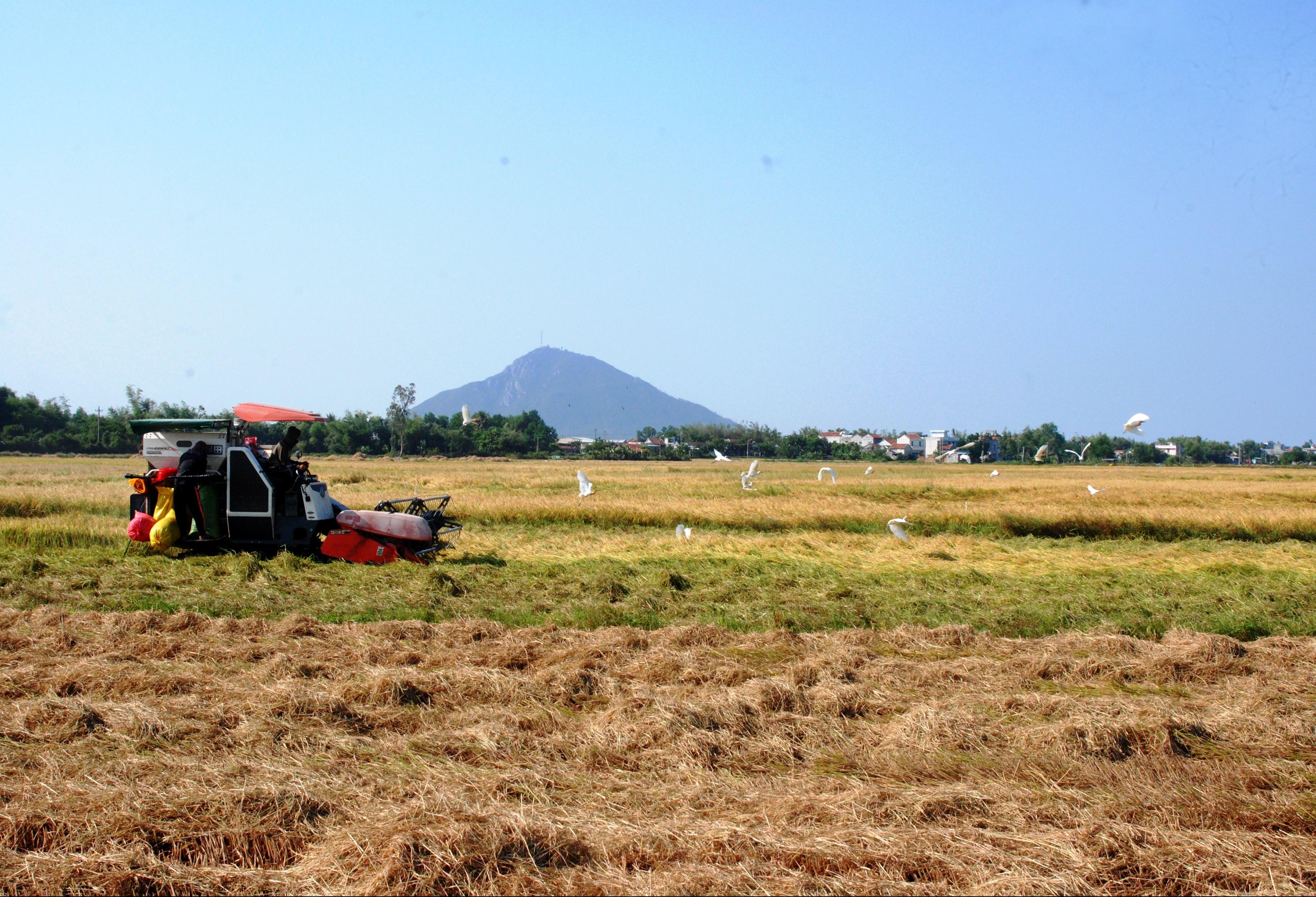 Ngành Nông nghiệp Phú Yên đang có bước phát triển đáng kể