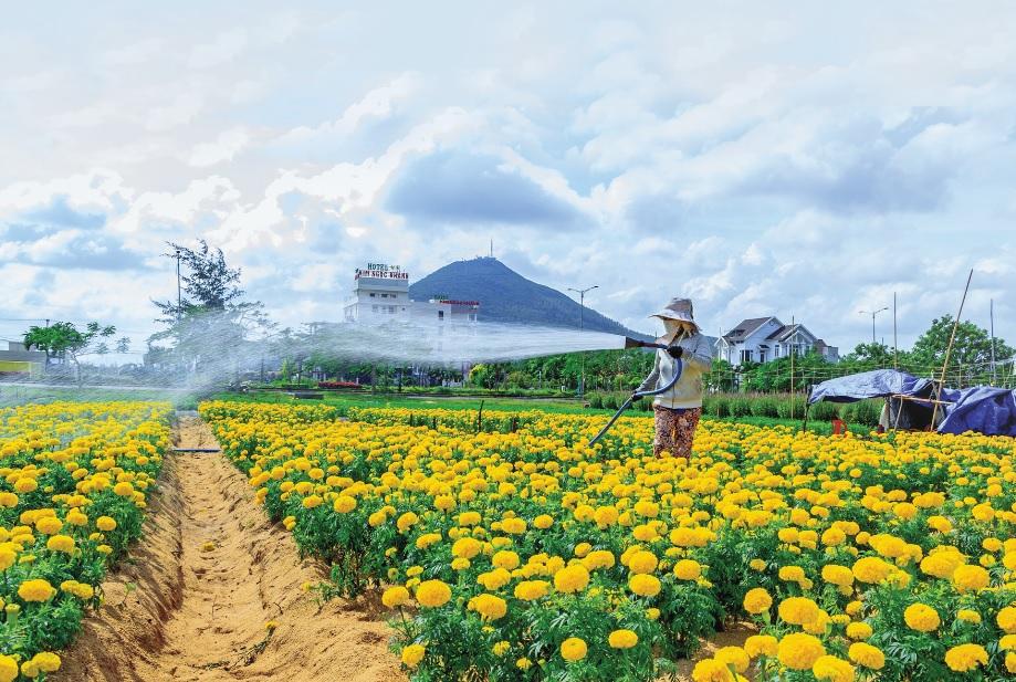 Những làng hoa quanh chân núi Chóp Chài