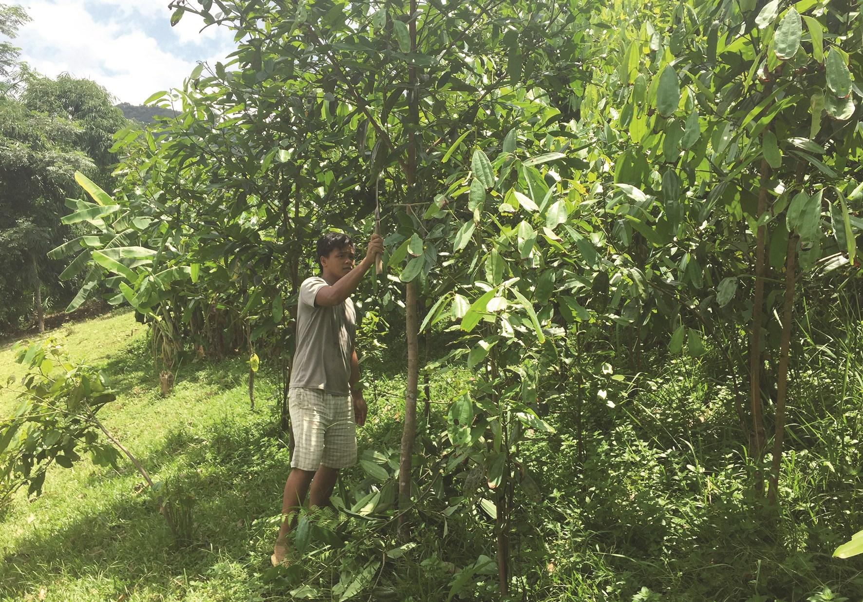 Việc hỗ trợ trồng rừng sau đầu tư góp phần nâng cao đời sống người dân tham gia trồng rừng
