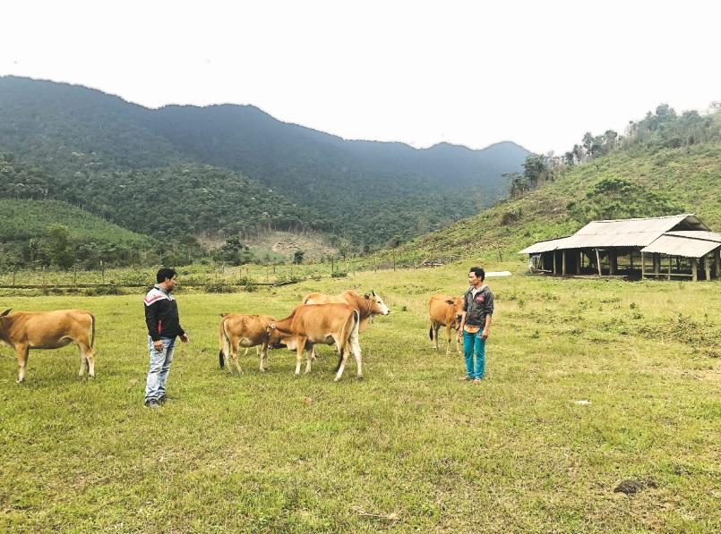 Từ phát triển chăn nuôi đại gia súc, gia đình anh Lê Xuân Hải có điều kiện giúp đỡ các hộ khó khăn trong bản vươn lên thoát nghèo.