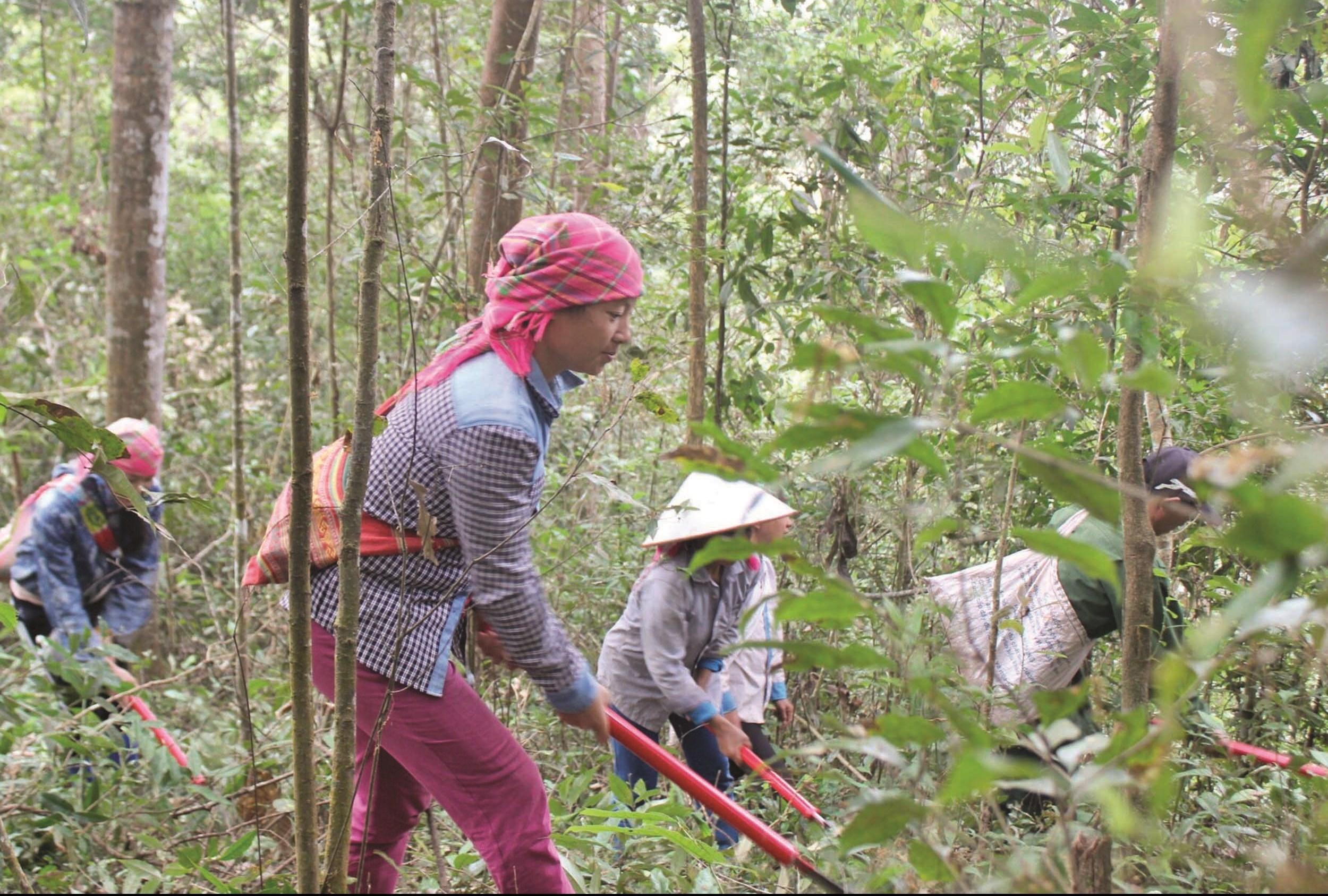 Người dân Mường Nhé phát dọn thực bì, phòng ngừa cháy rừng mùa hanh khô