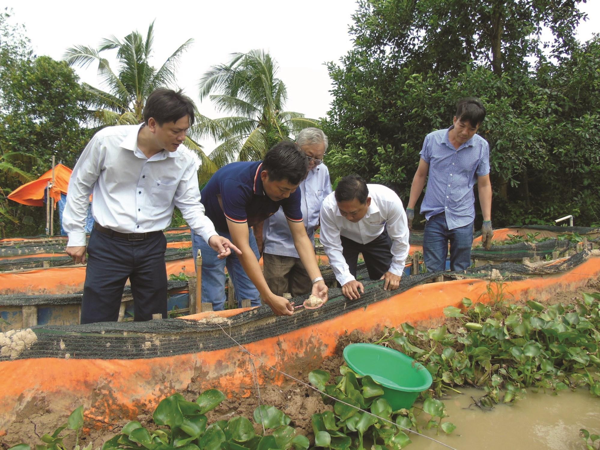 Mô hình nuôi lươn công nghệ cao của nông dân huyện Long Hồ.