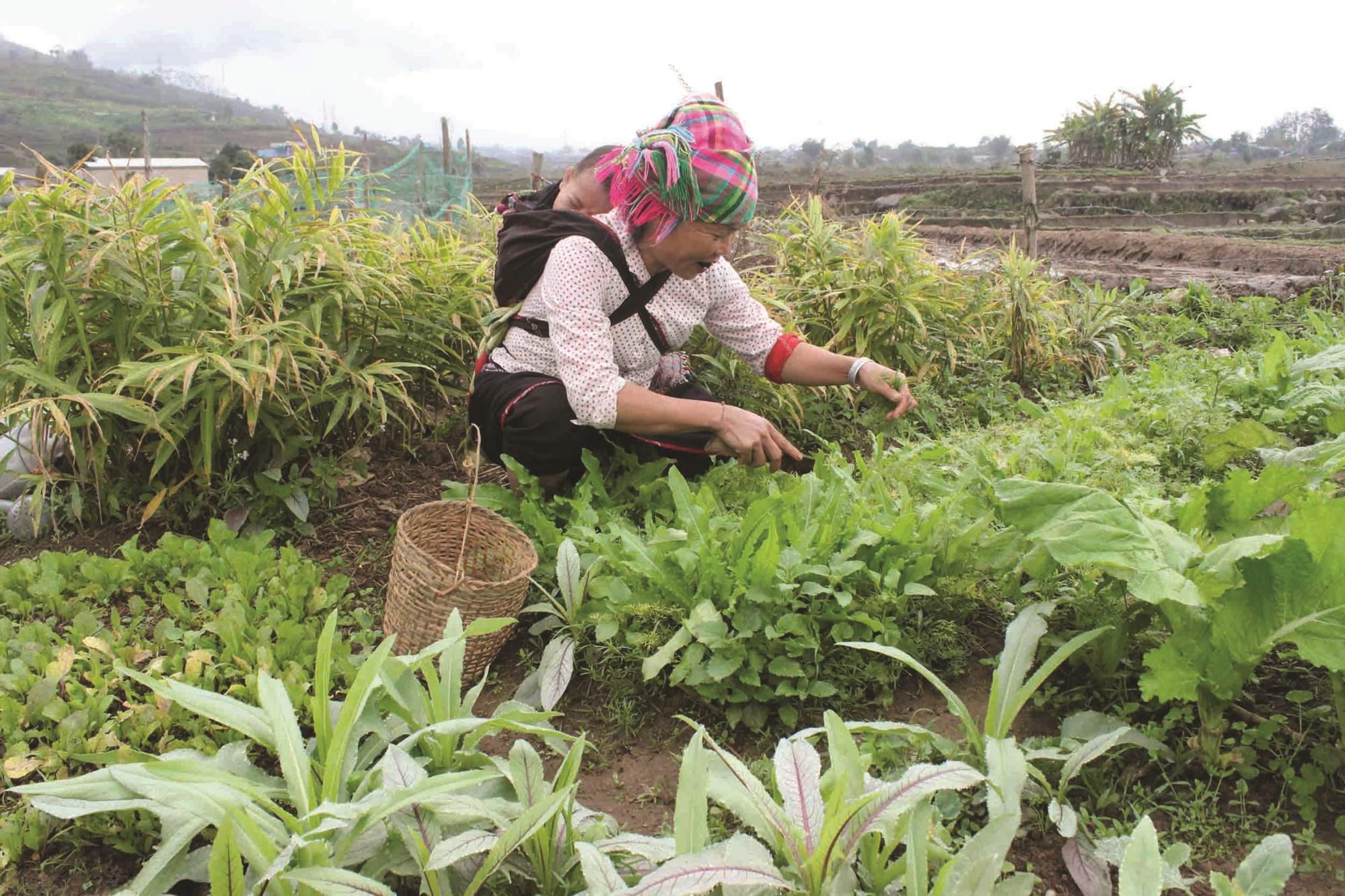 Sinh kế chính của phụ nữ DTTS vẫn là sản xuất nông nghiệp. (Ảnh minh họa)