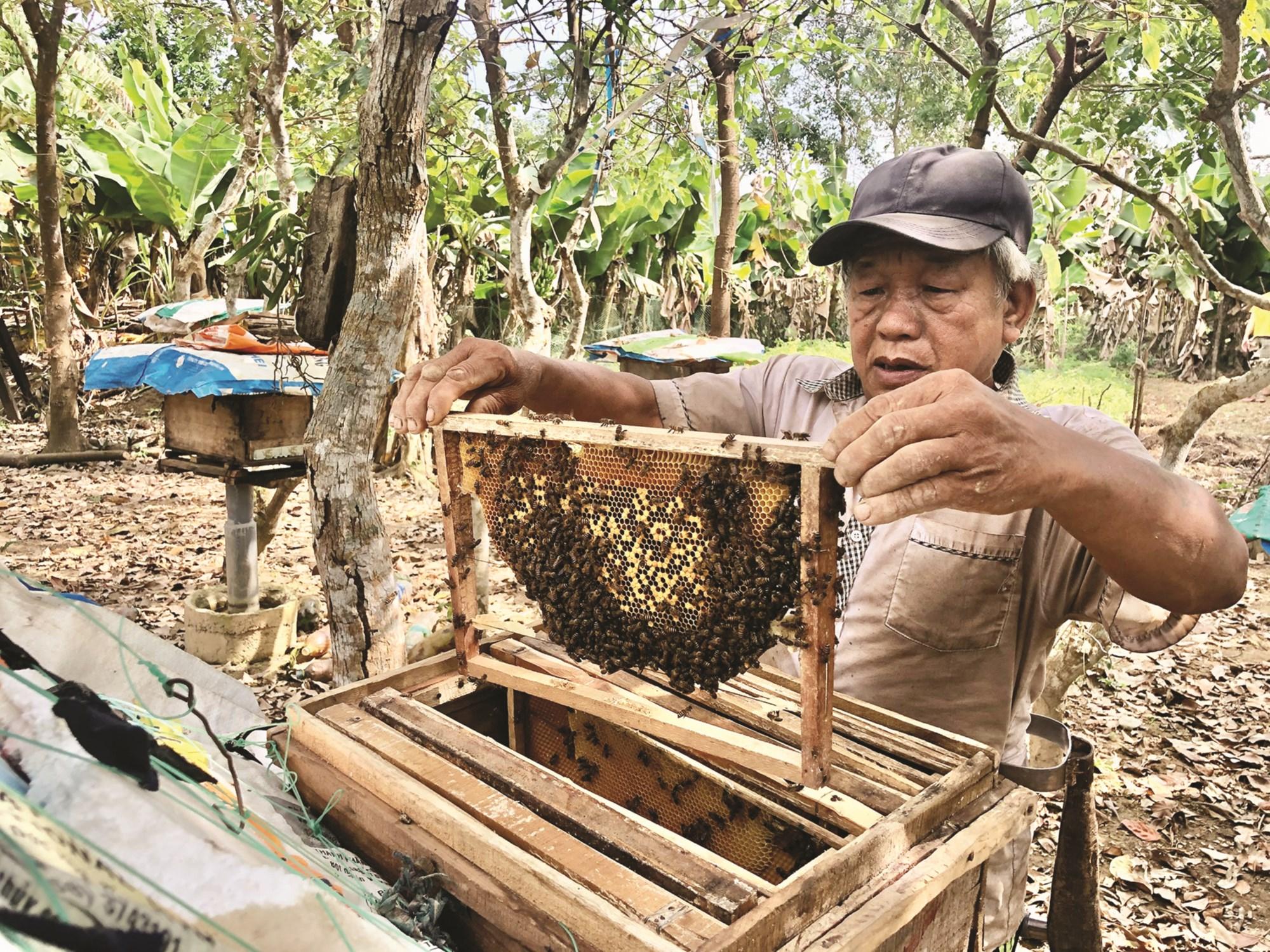 Từ nguồn vốn vay ưu đãi, ông Hà Văn Bàng đã phát triển mô hình nuôi ong lấy mật đem lại thu nhập ổn định.