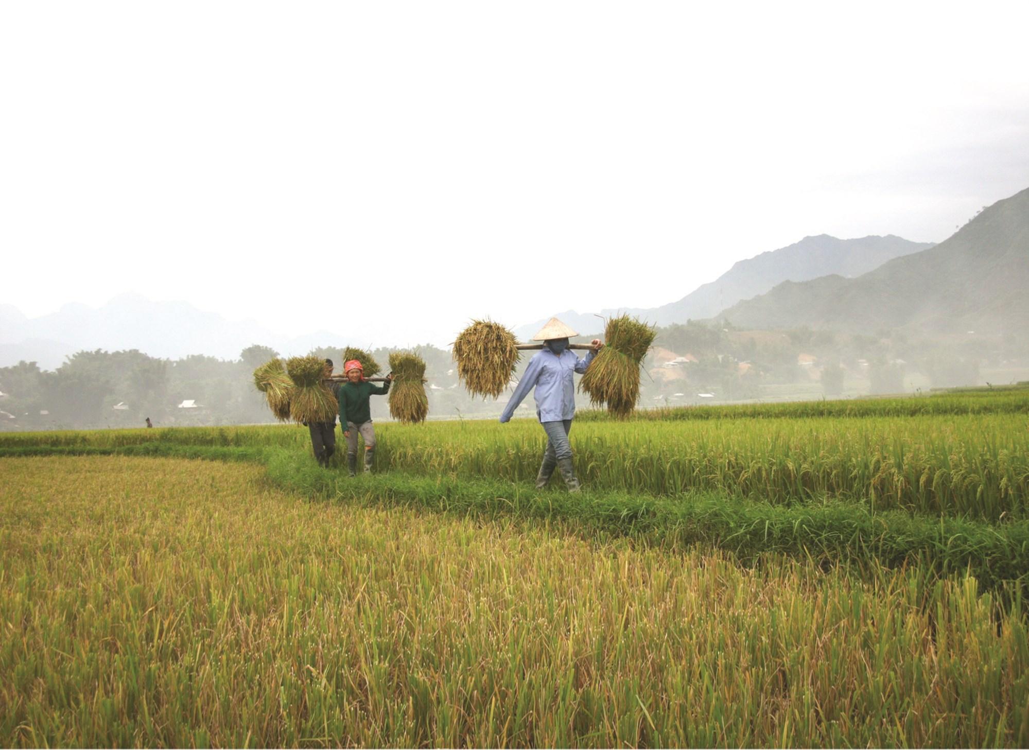"""Đa số những người lao động chưa qua đào tạo chuyên môn kỹ thuật chỉ tham gia sản xuất nông nghiệp nên có mức sống thuộc nhóm """"nghèo nhất"""". (Ảnh minh họa)"""