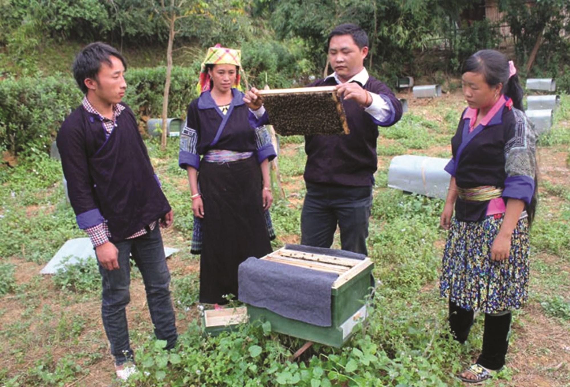 Những năm qua huyện Mù Cang Chải luôn chú trọng đào tạo nghề cho LĐNT