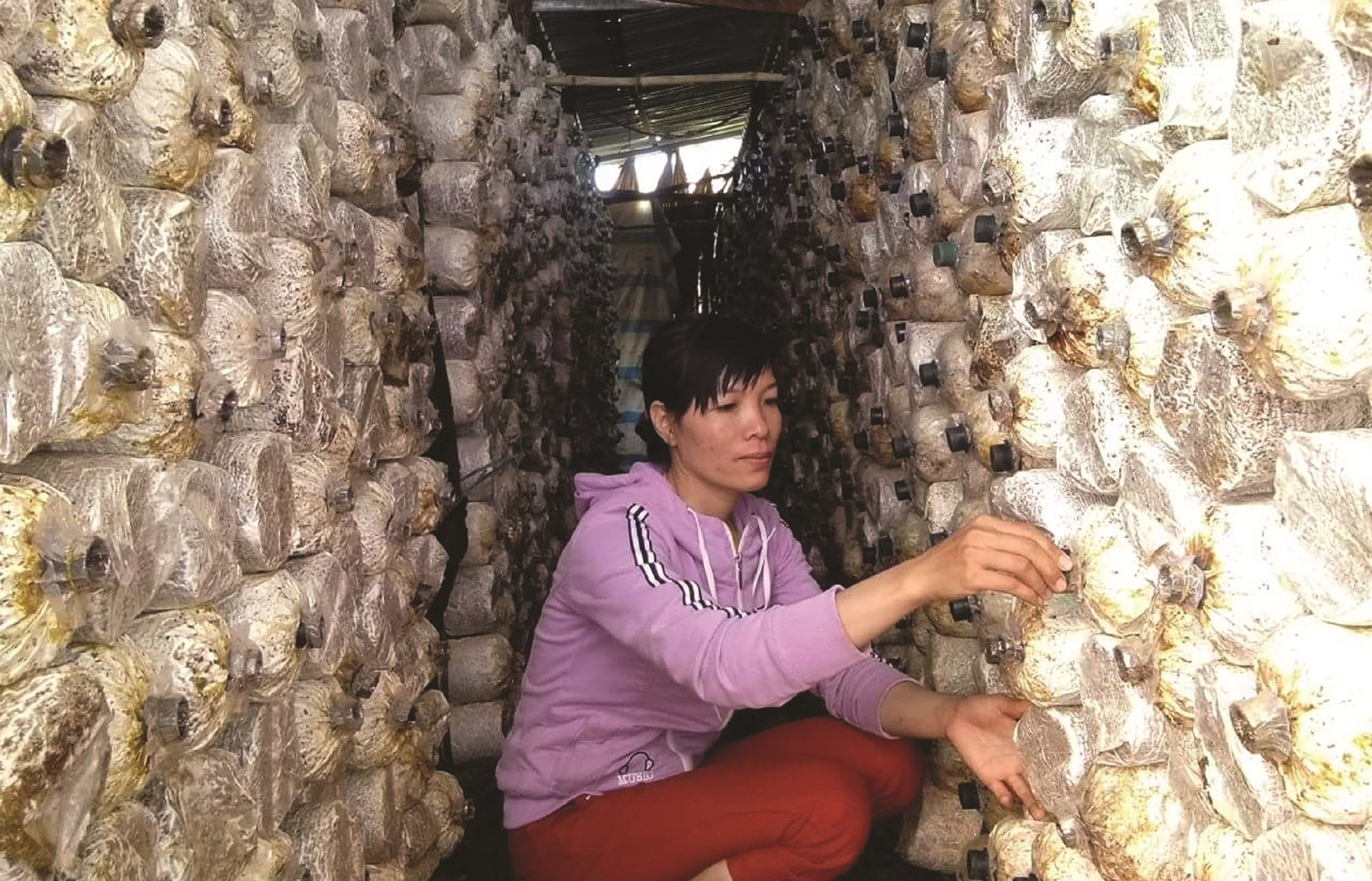 Chị Dơn trong trang trại trồng nấm của gia đình mình.