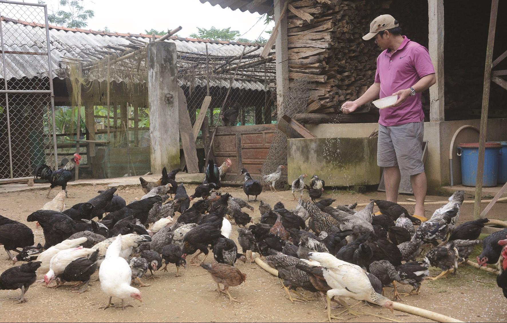 Nhờ đầu tư phát triển chăn nuôi giúp cho nhiều hộ đồng bào DTTS ở Trà Bồng thoát nghèo